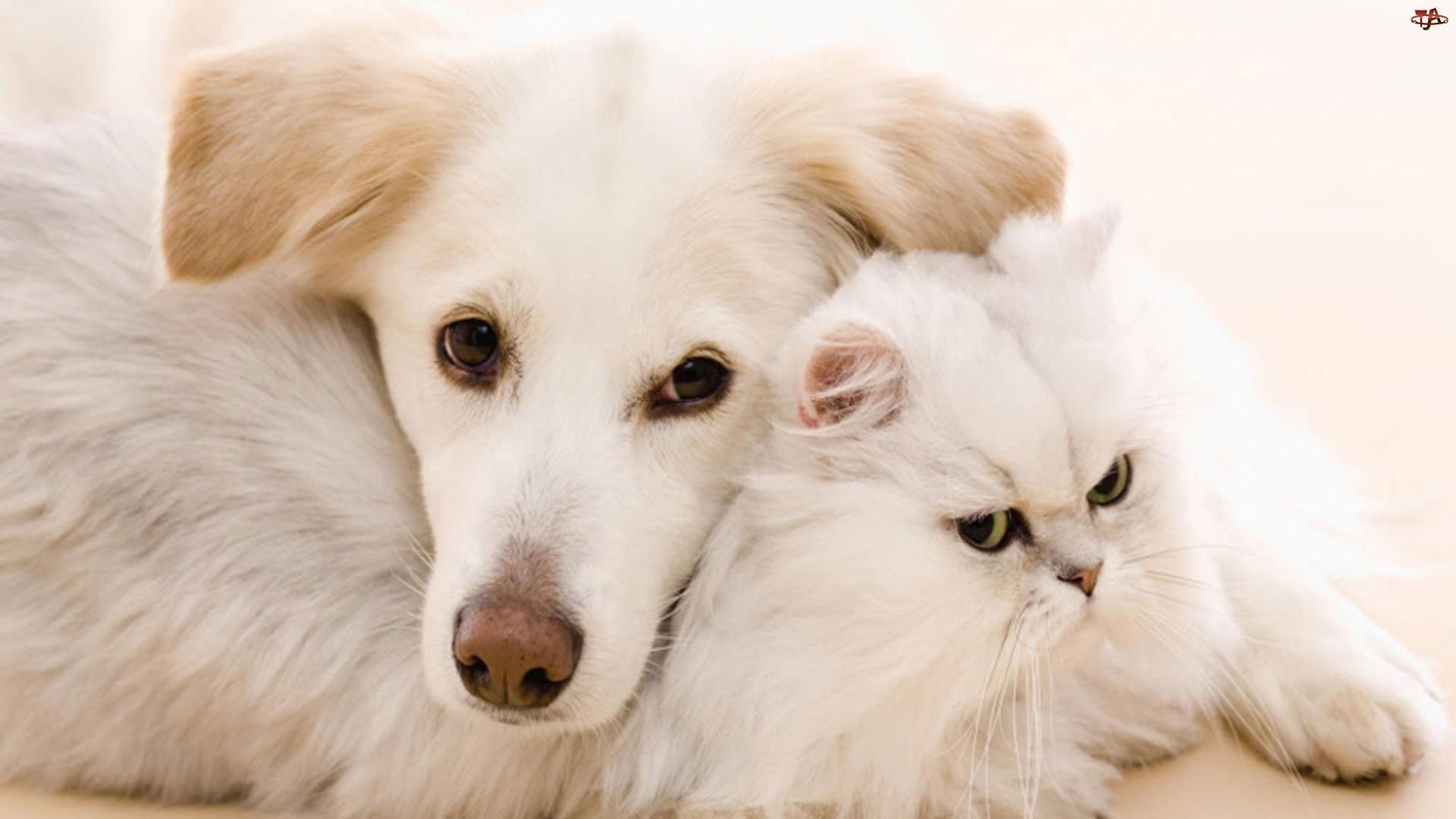 Kot Biały Pies Tapety Tja Pl