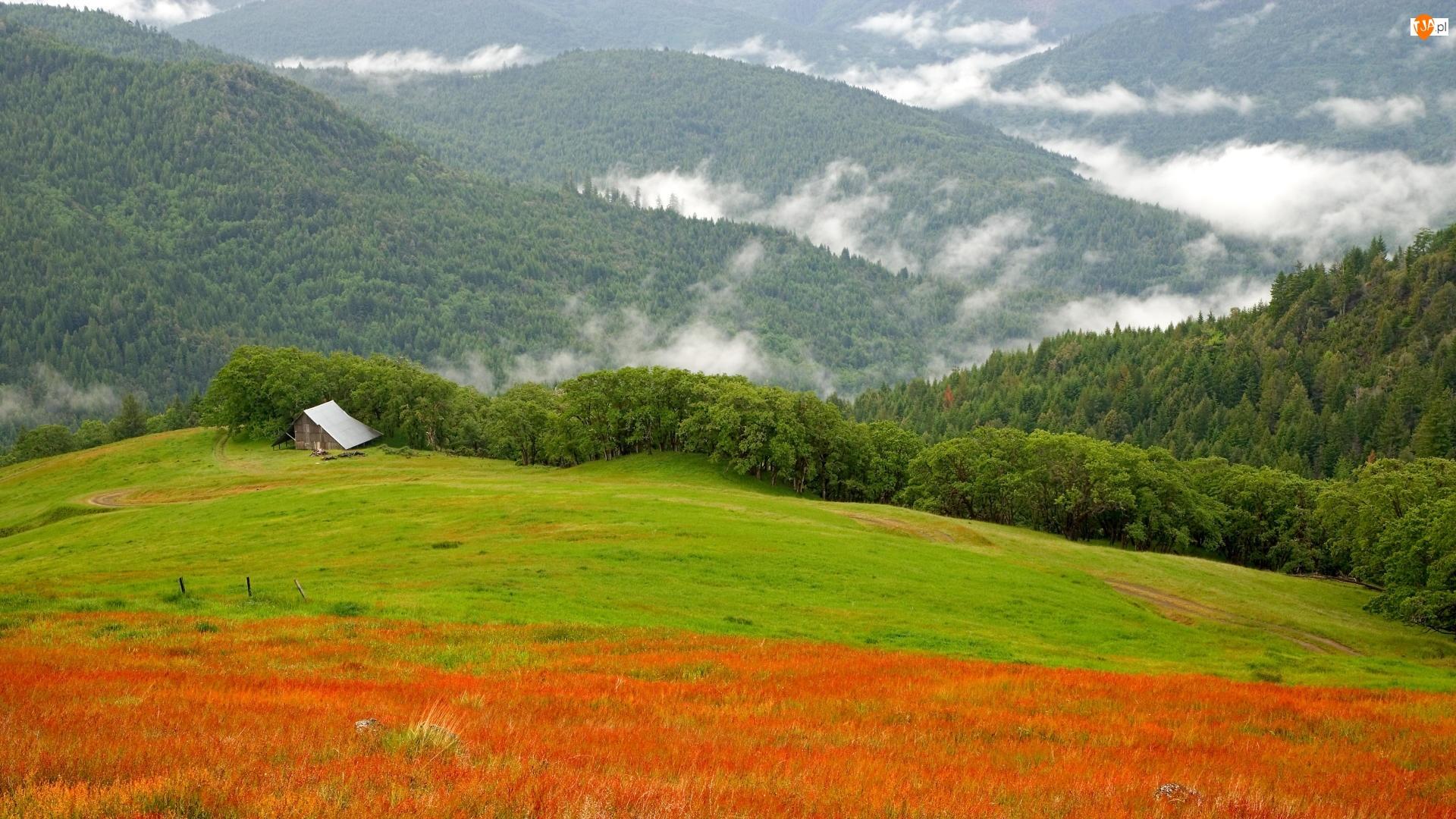 Zielone, Szopa, Wzgórza, Lasy