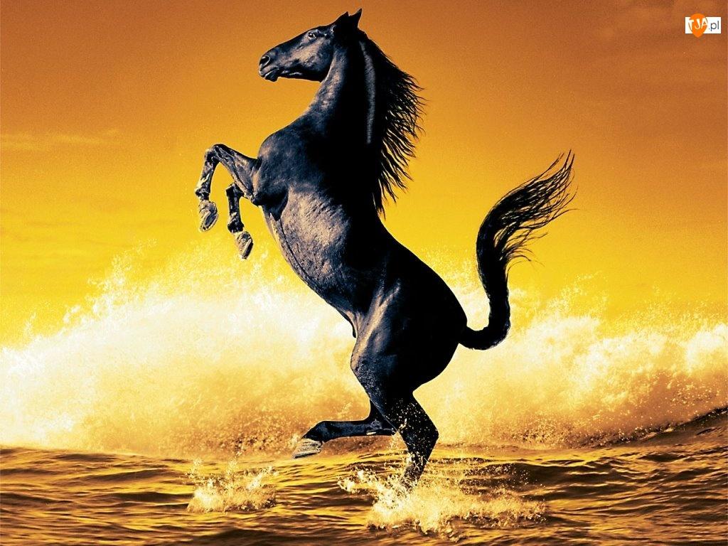Czarny, Fale, Koń, Morze
