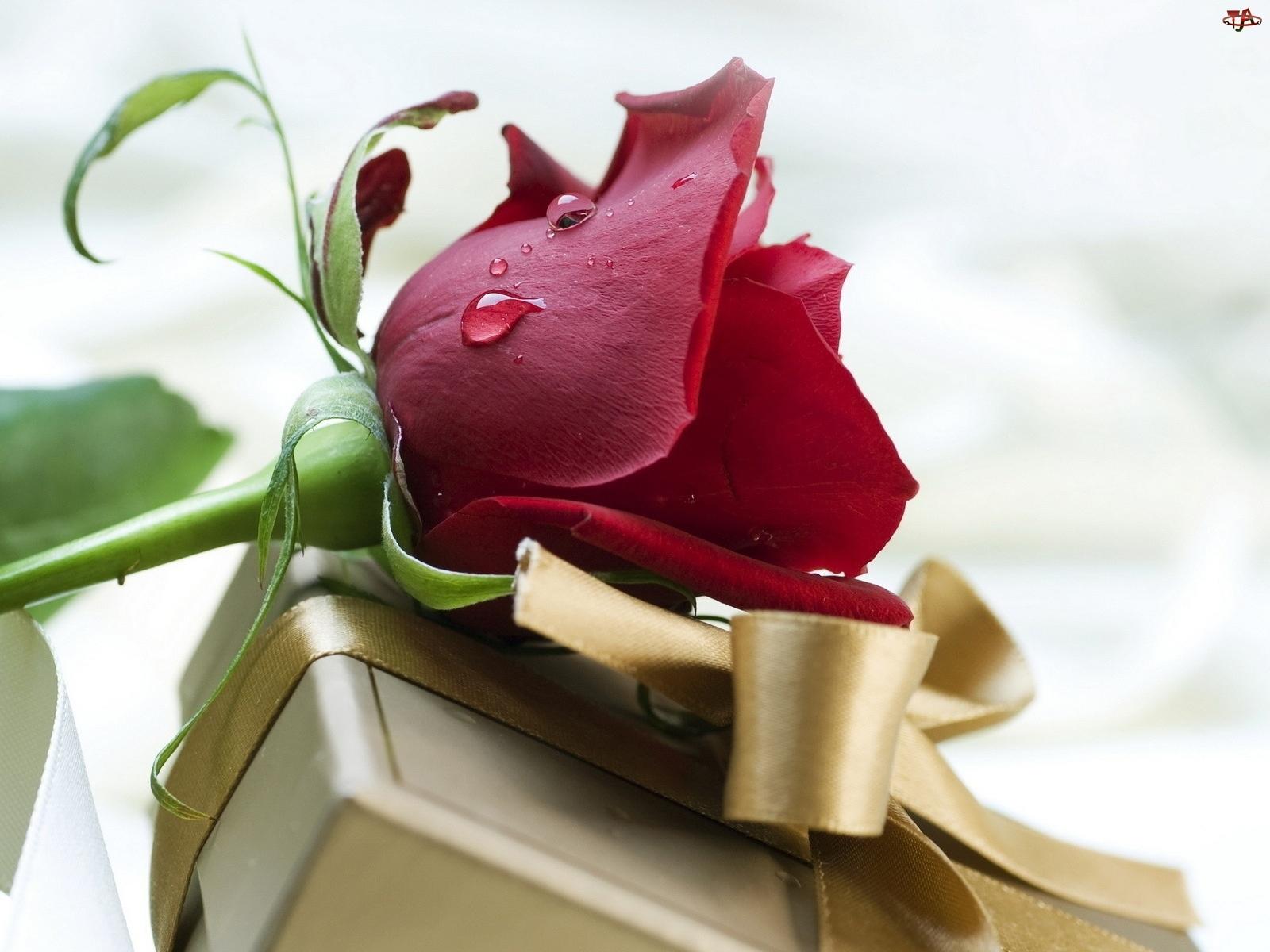 Цветы для любимой фото 19 фотография
