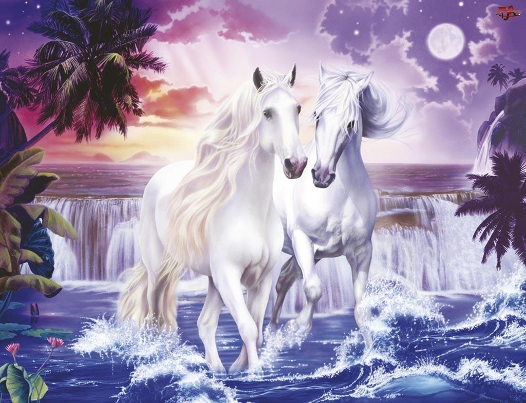 Wodospad, Białe, Konie