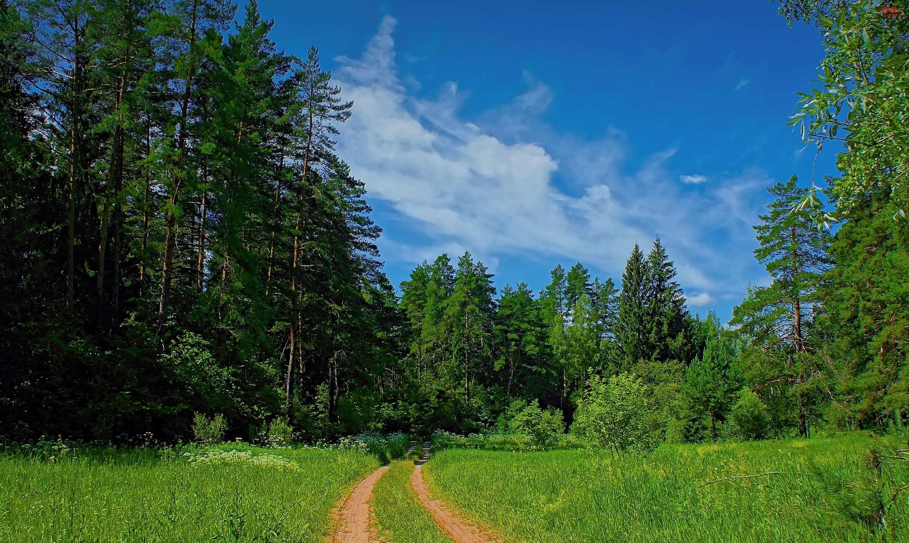 Niebo, Trawa, Drzewa