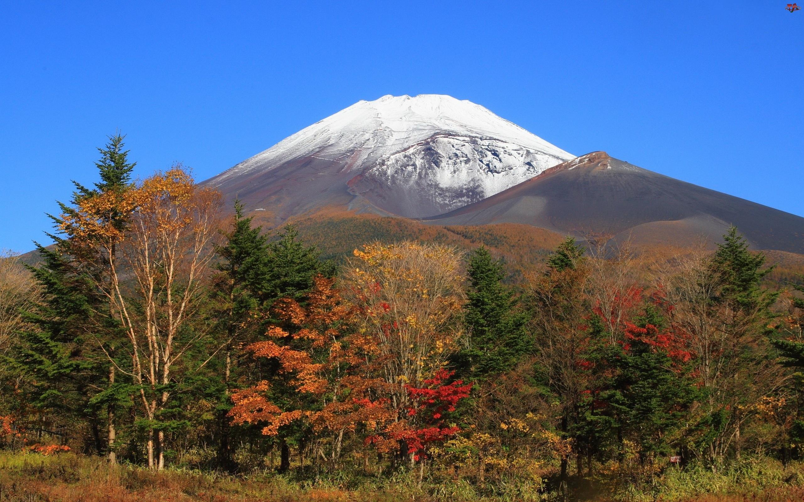 Jesień, Góra, Drzewa