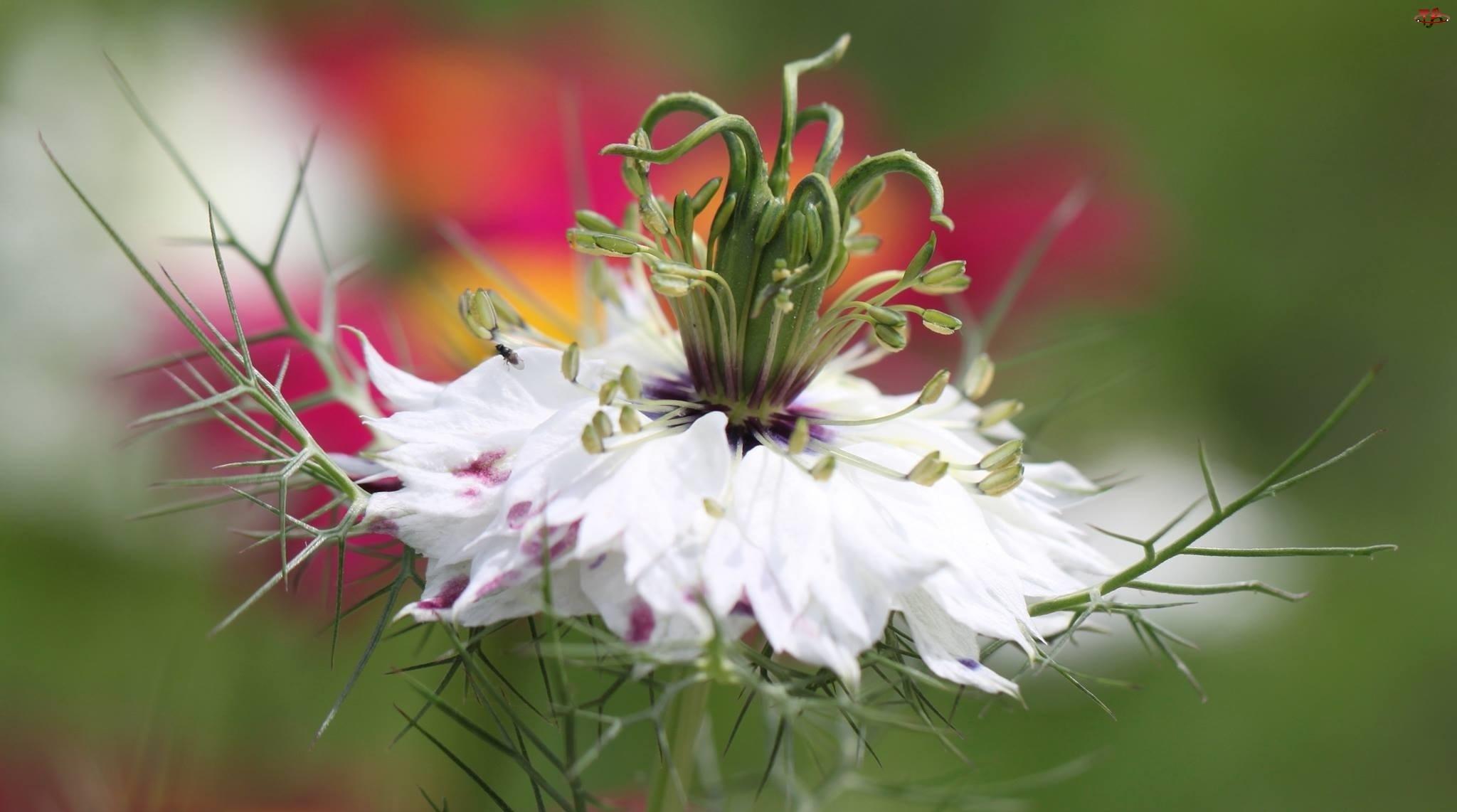 Biały, Kwiat