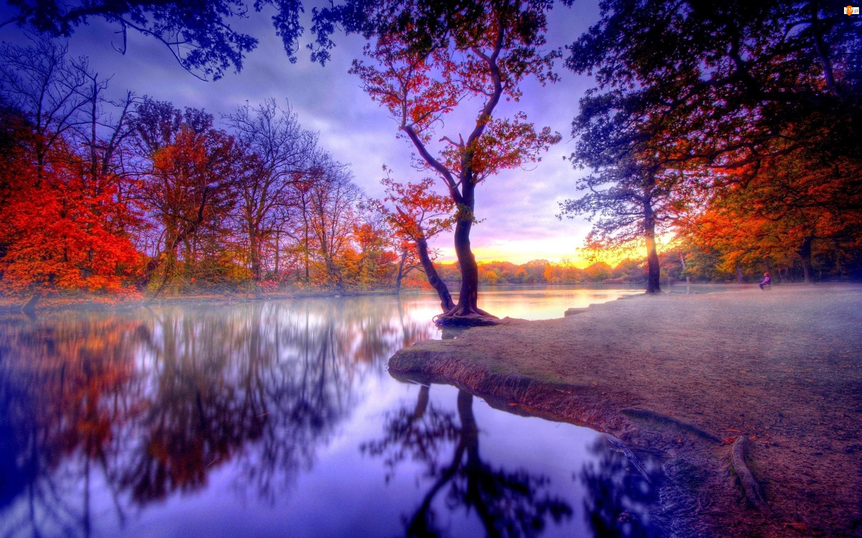 Drzewa, Jesień, Park, Rzeka, Kolorowe