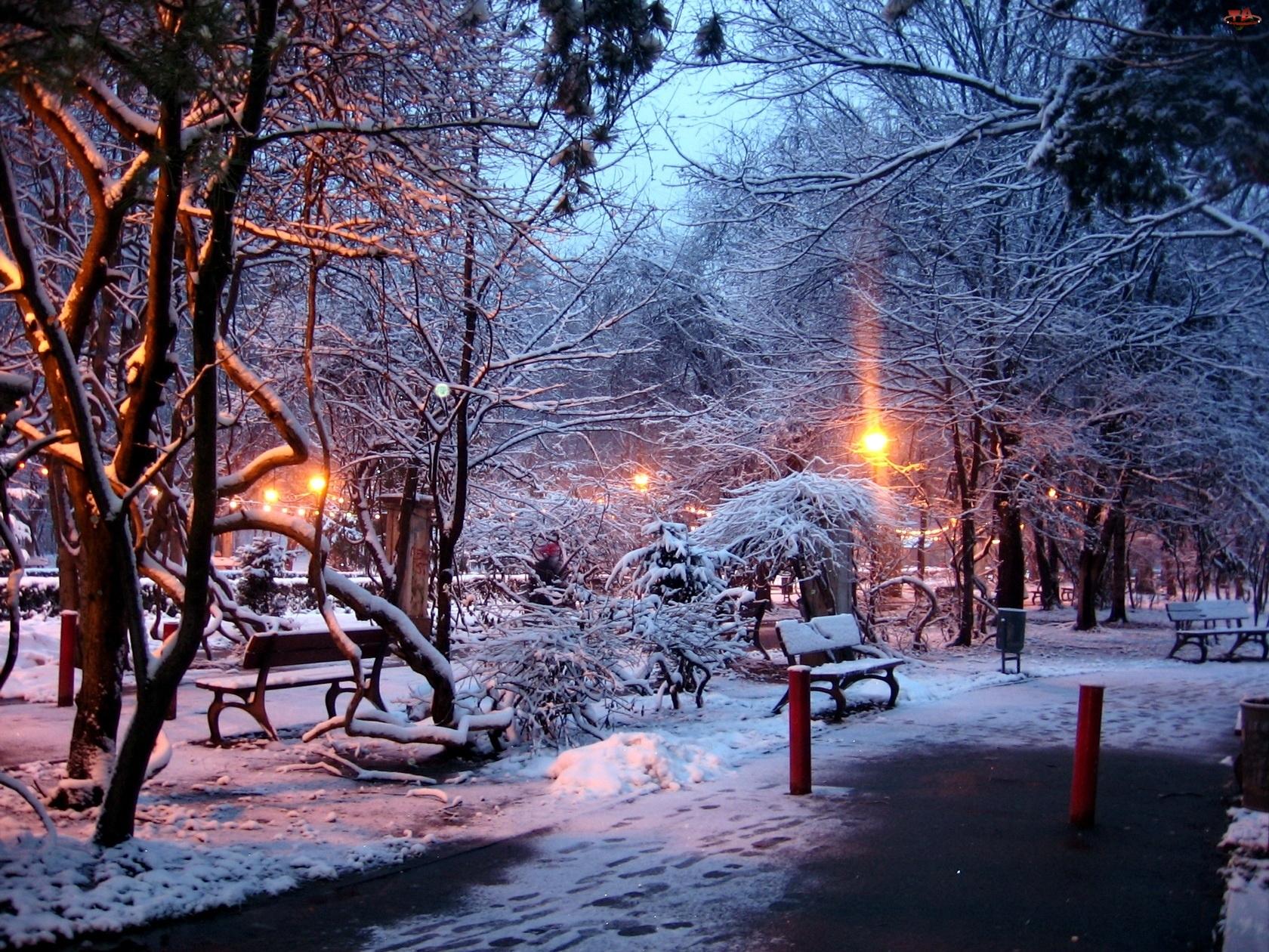 Ławki, Światło, Park, Zima, Drzewa, Przebijające