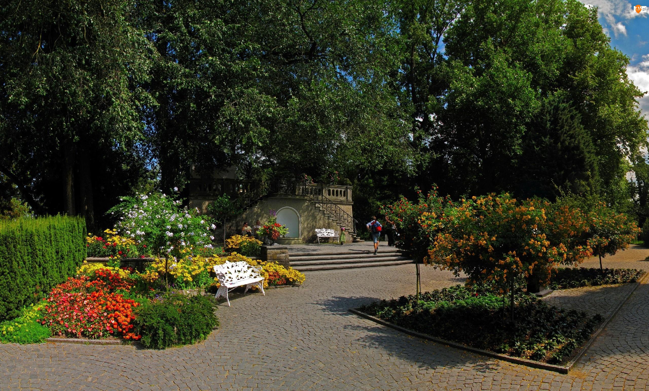 Park, Ławka, Drzewa, Kwiaty