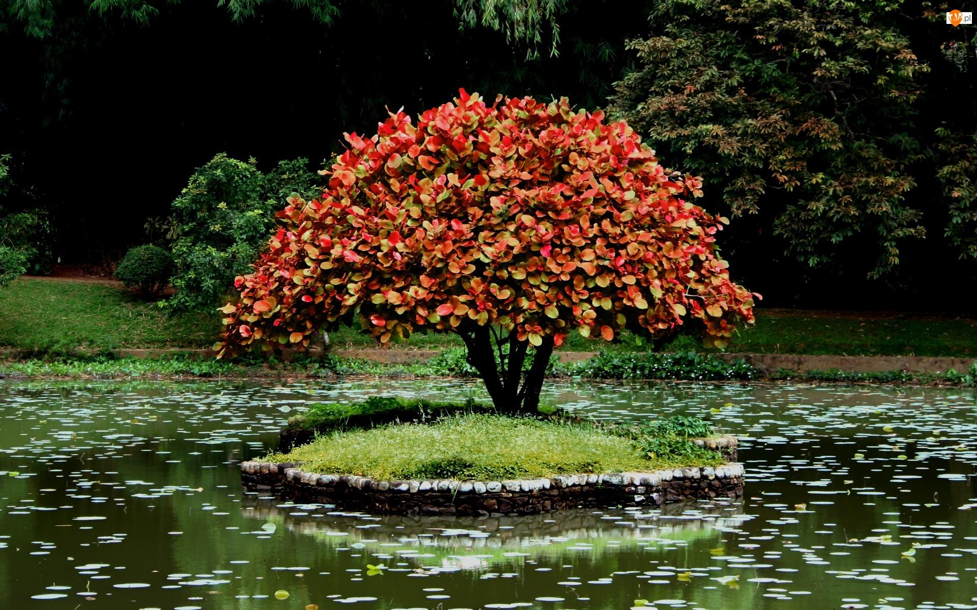 Drzewko Bonsai, Park, Wysepka