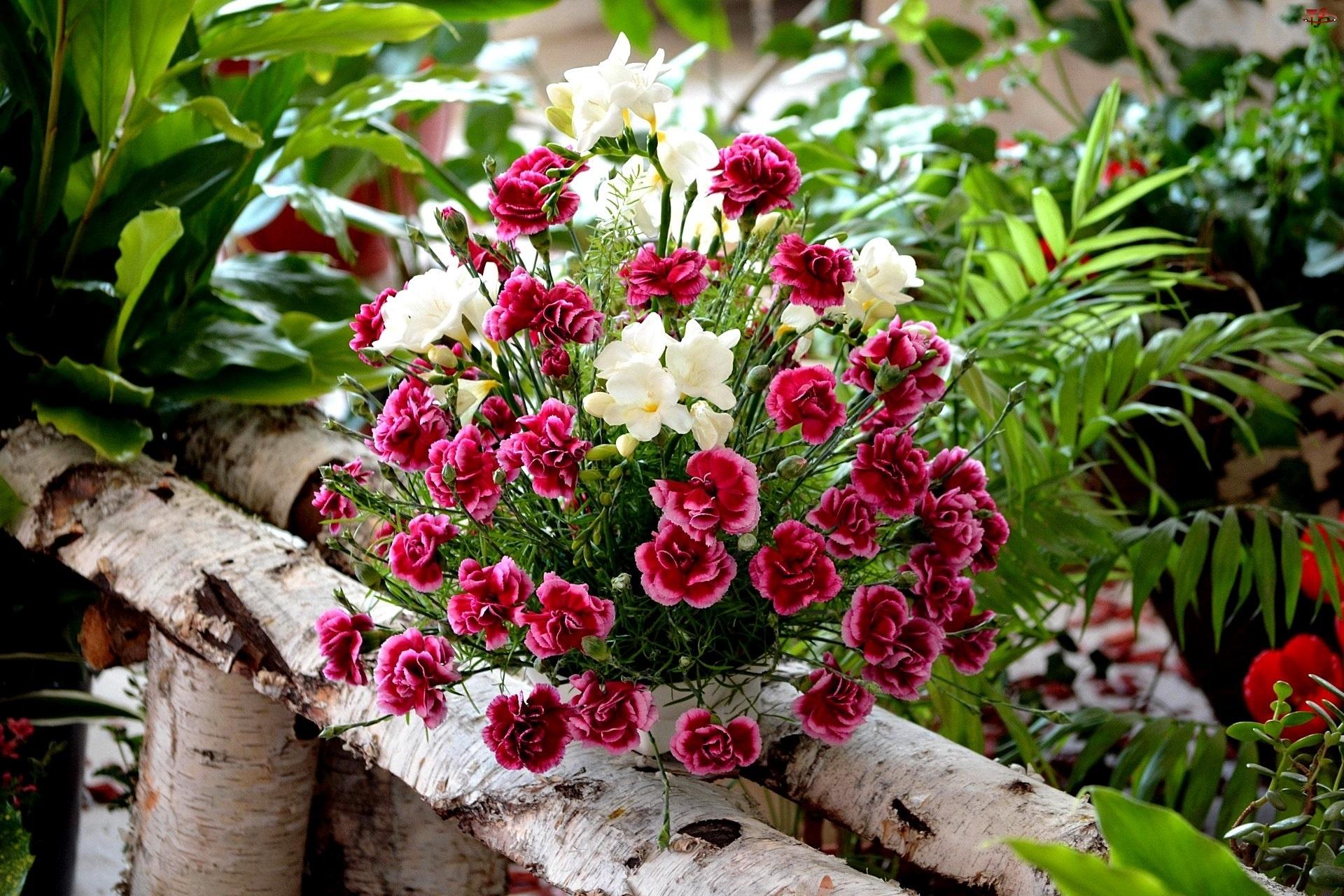 Bukiet, Frezje, Kwiatów, Gozdzik Brodaty