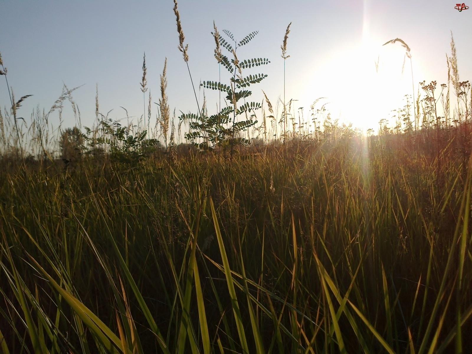 Promienie Słońca, Łąka, Trawy