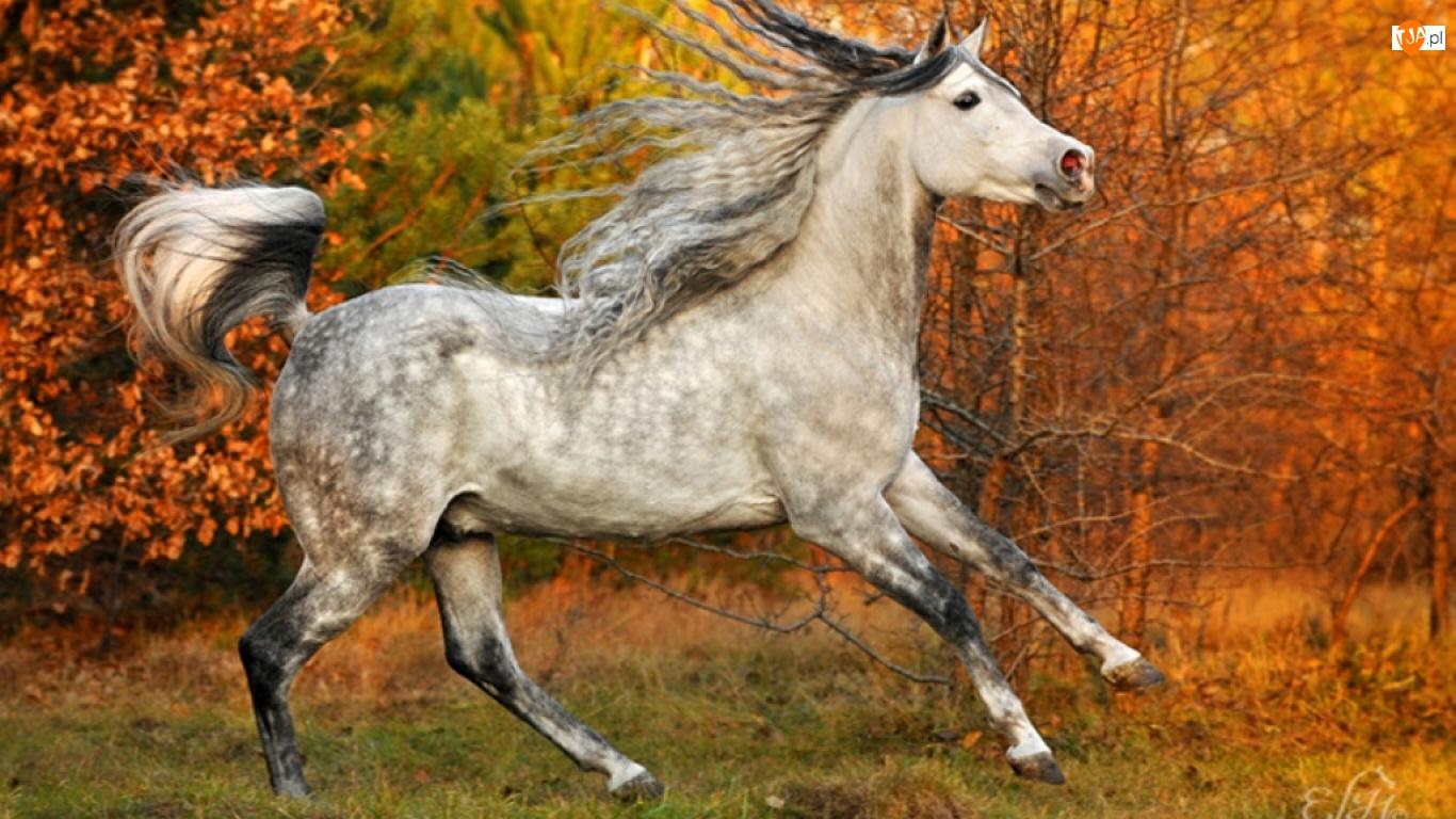 Las, Koń, Jesień