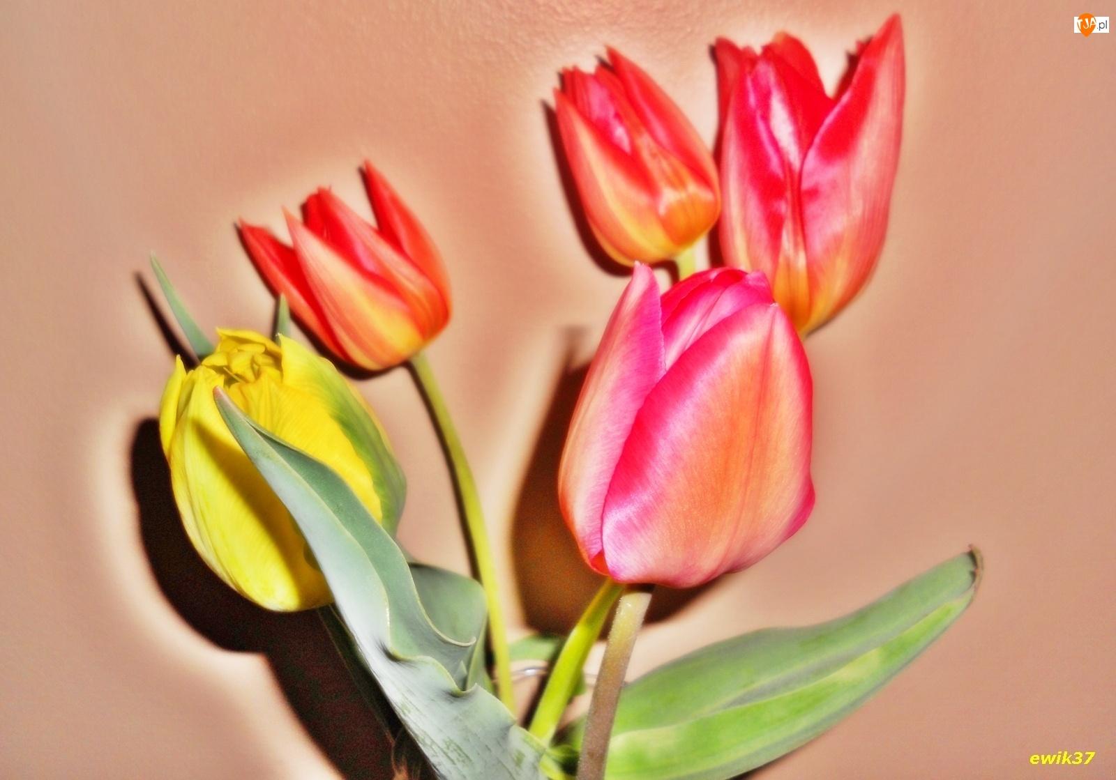 Efekty Graficzne, Kwiaty, Tulipany