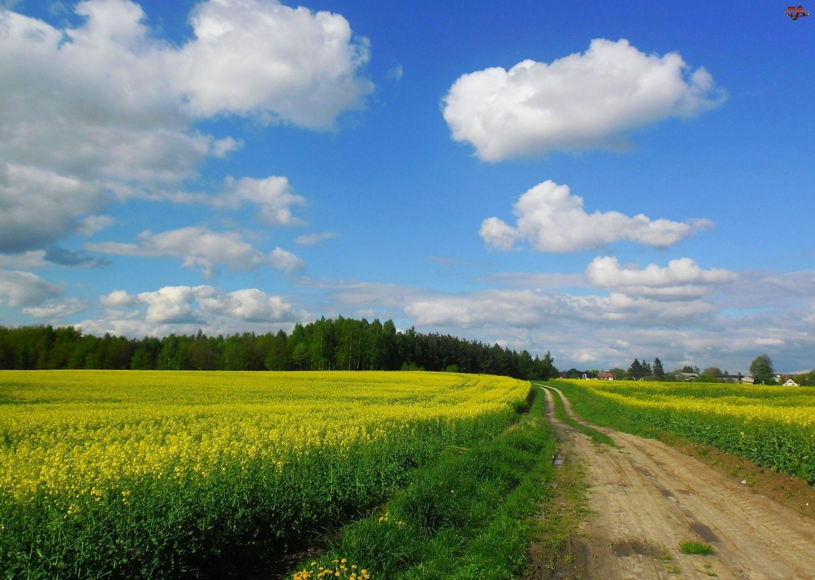Wiosna, Droga, Pole, Rzepak