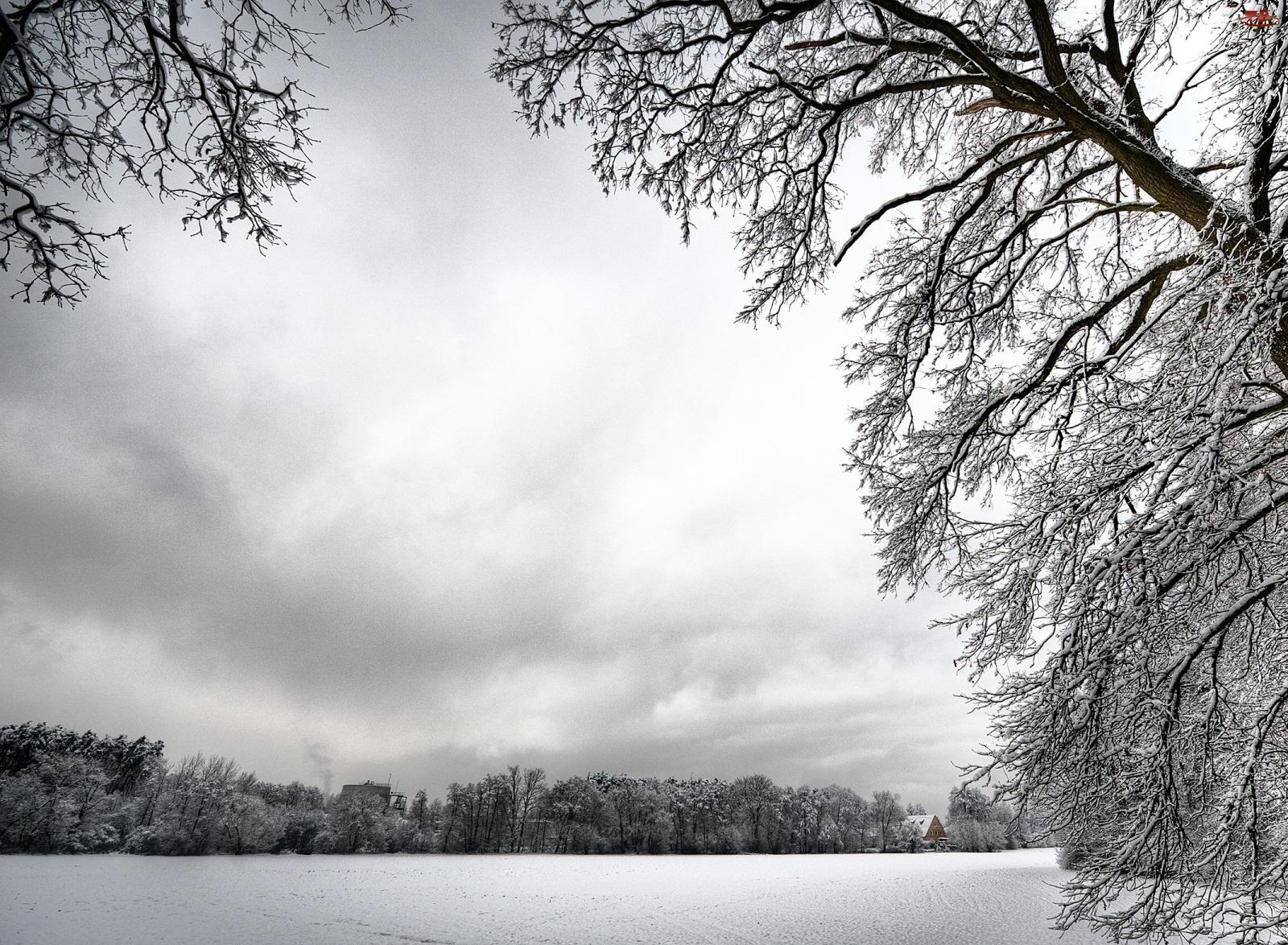 Drzewa, Zimowa, Sceneria