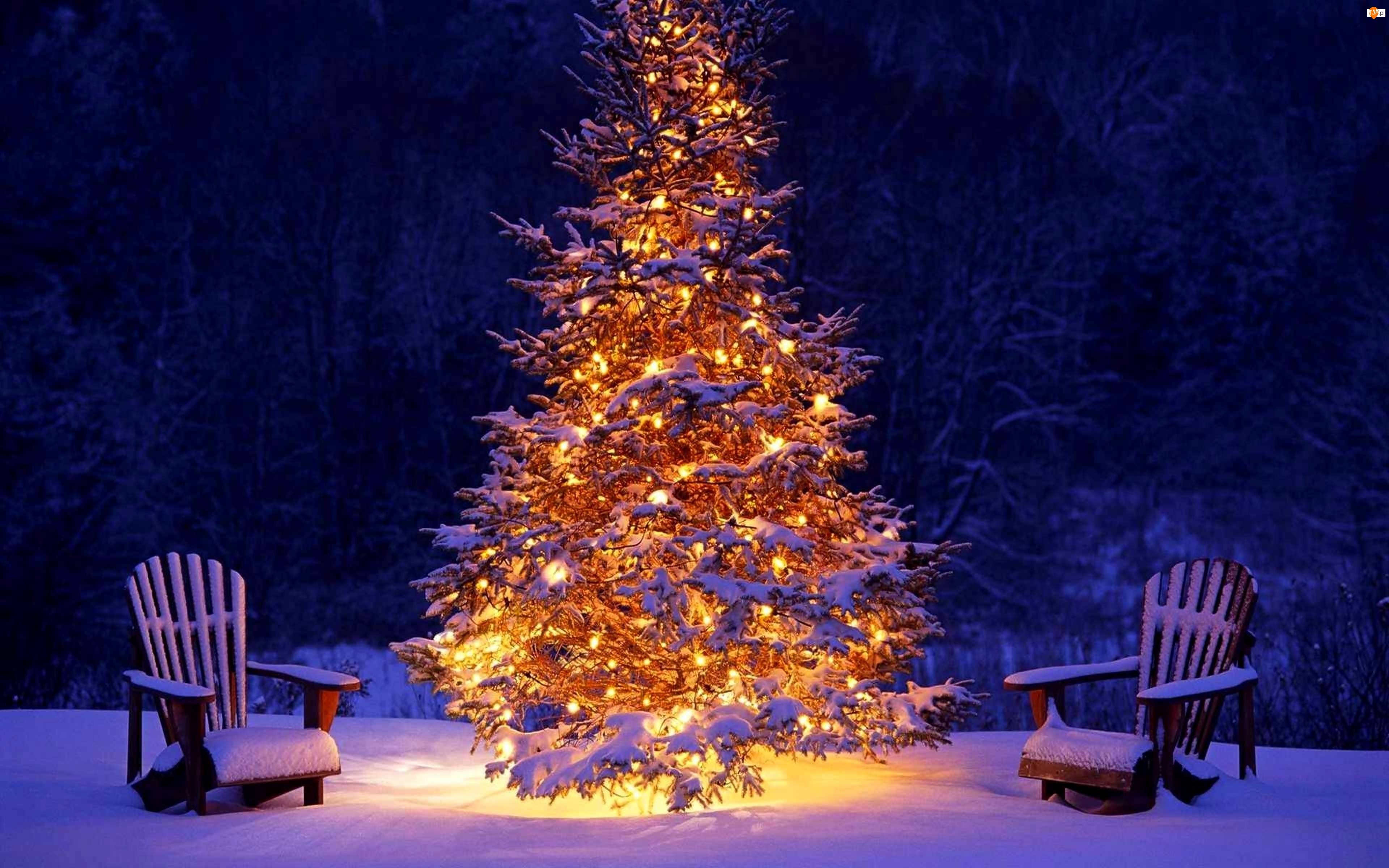 Zima, Oświetlona, Fotele, Choinka, Śnieg