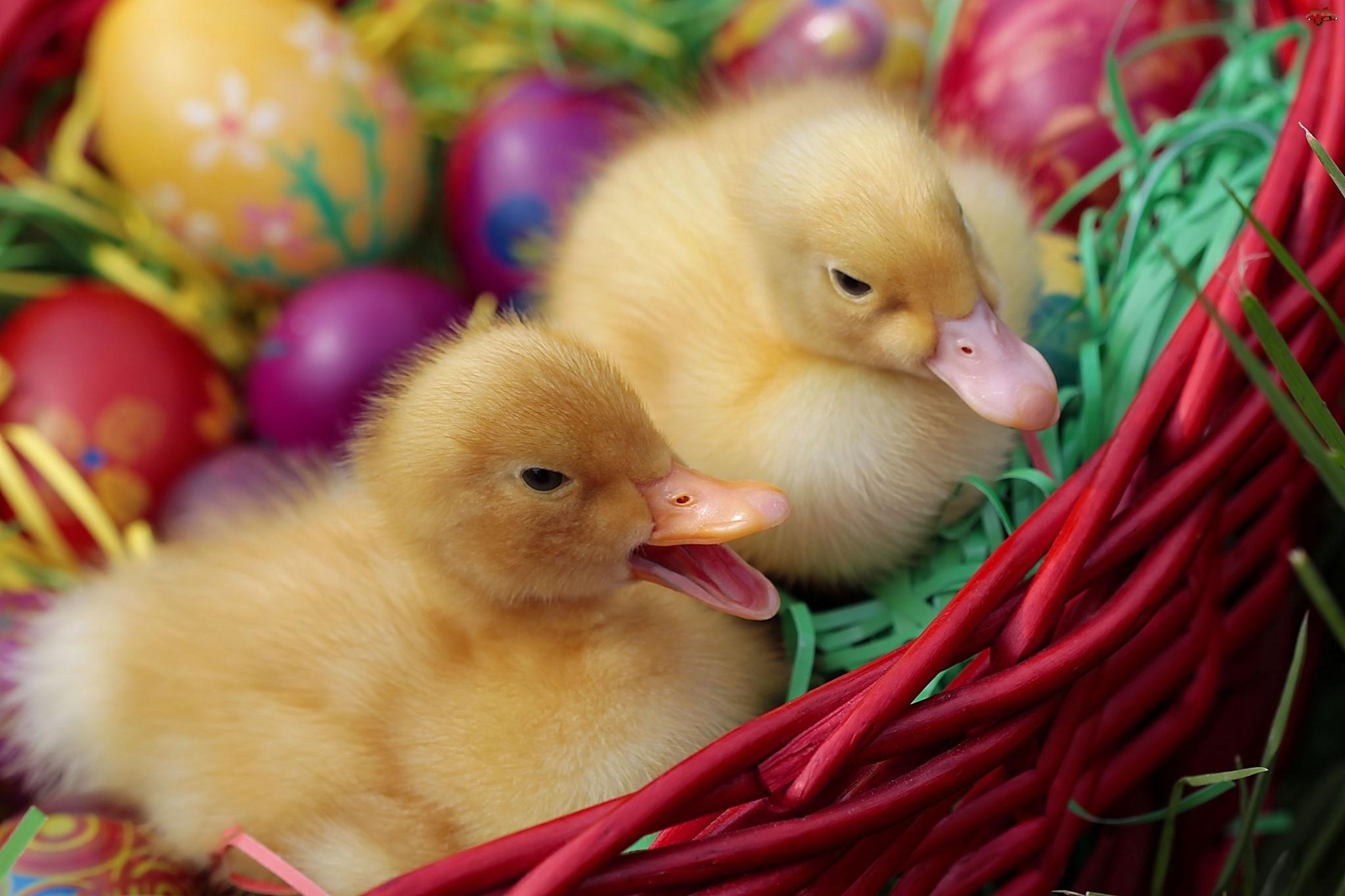 Dwie, Wielkanoc, Kaczuszki, Kosz