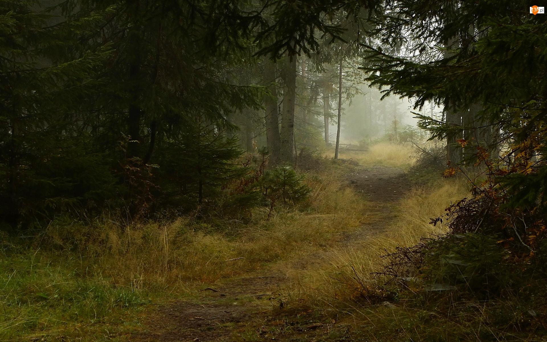 Las, Jesień, Ścieżka, Mgła