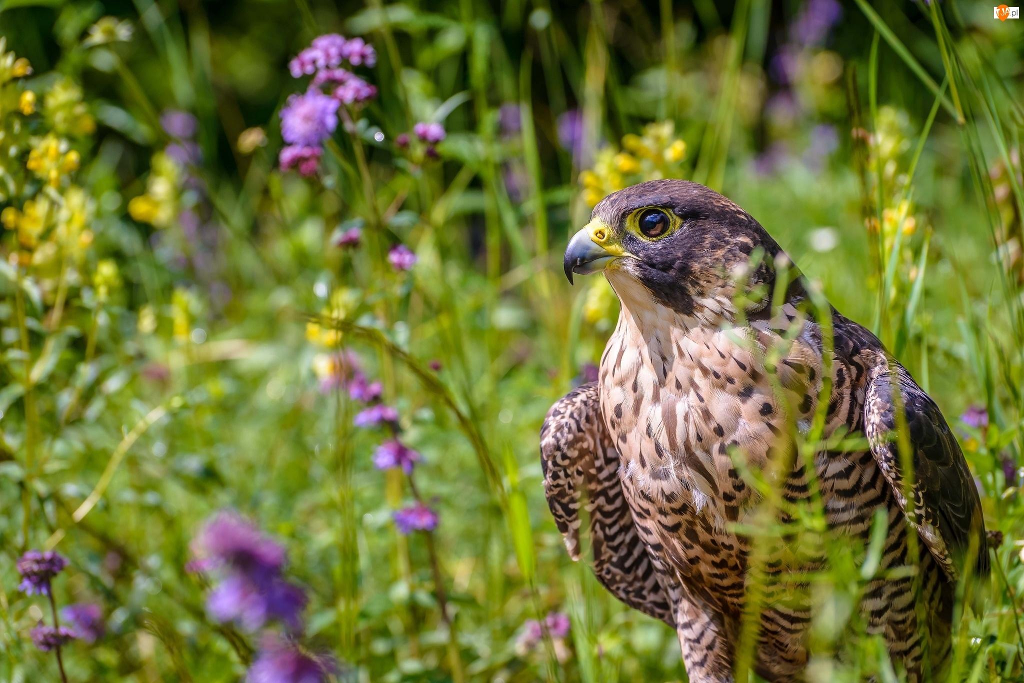 Секс с птицами фото 4 фотография