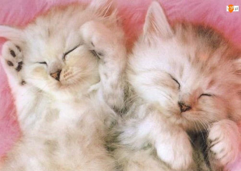 Kotki, Śpiące, Puszyste