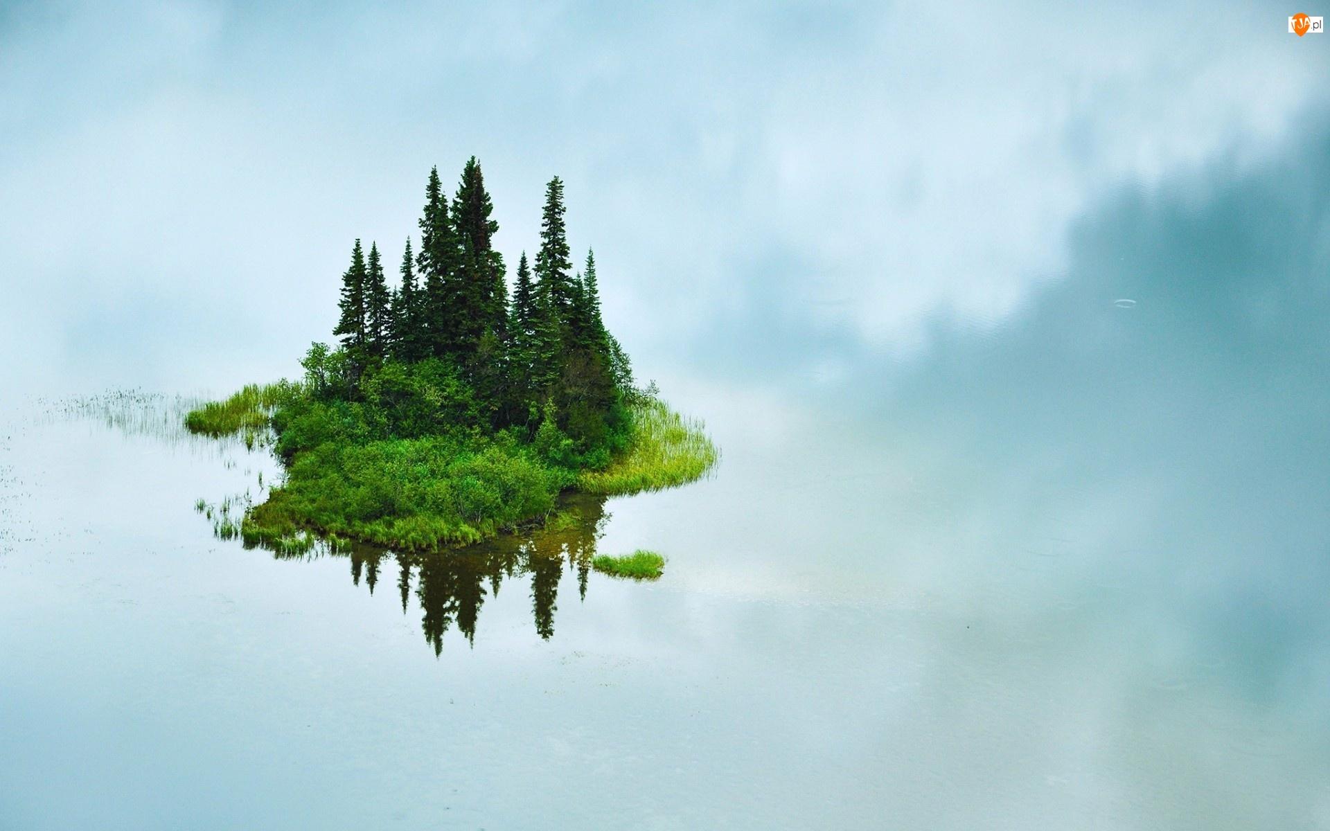 Jezioro, Odbicie, Wyspa, Drzewa