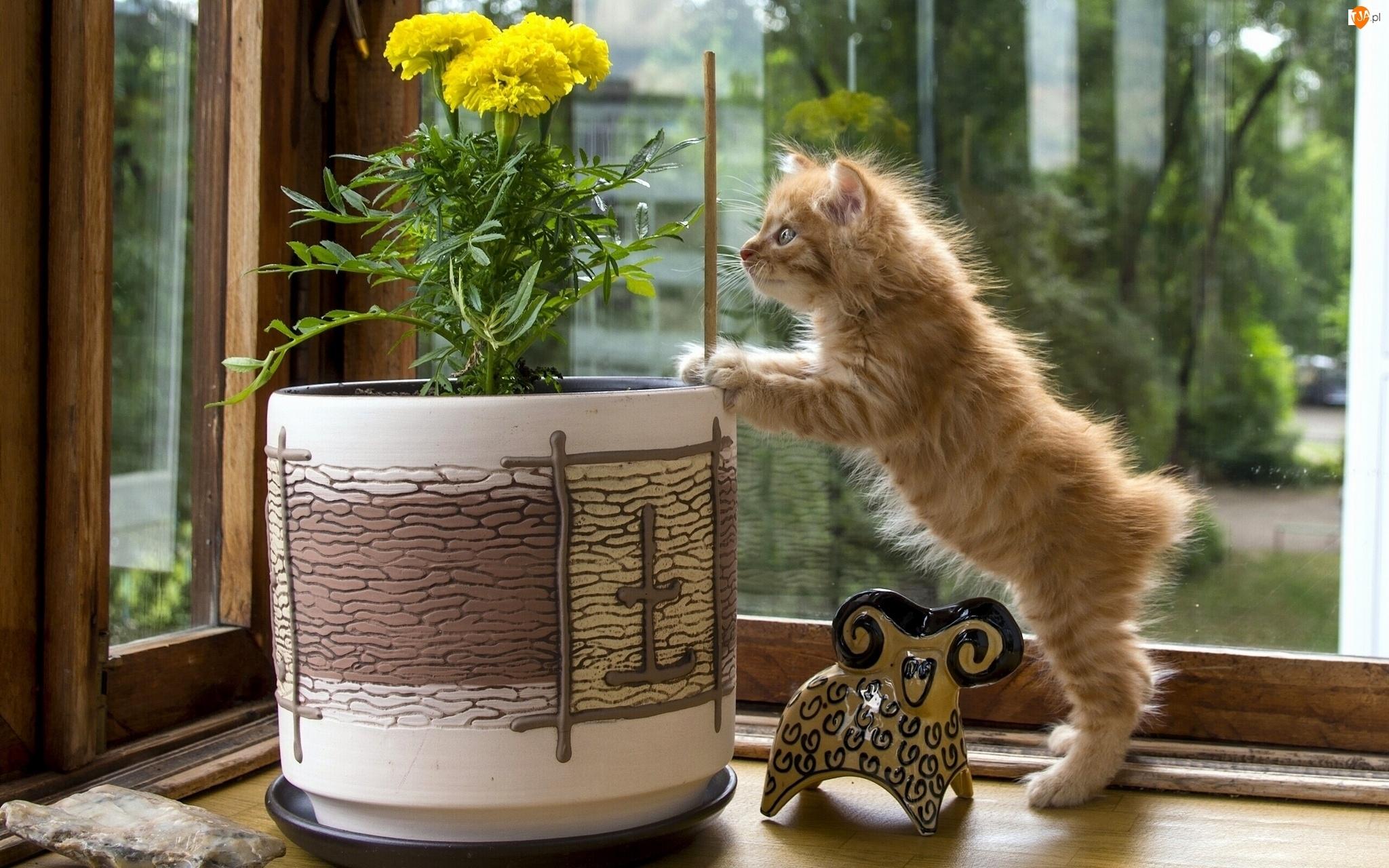 Doniczka, Kot, Kwiaty