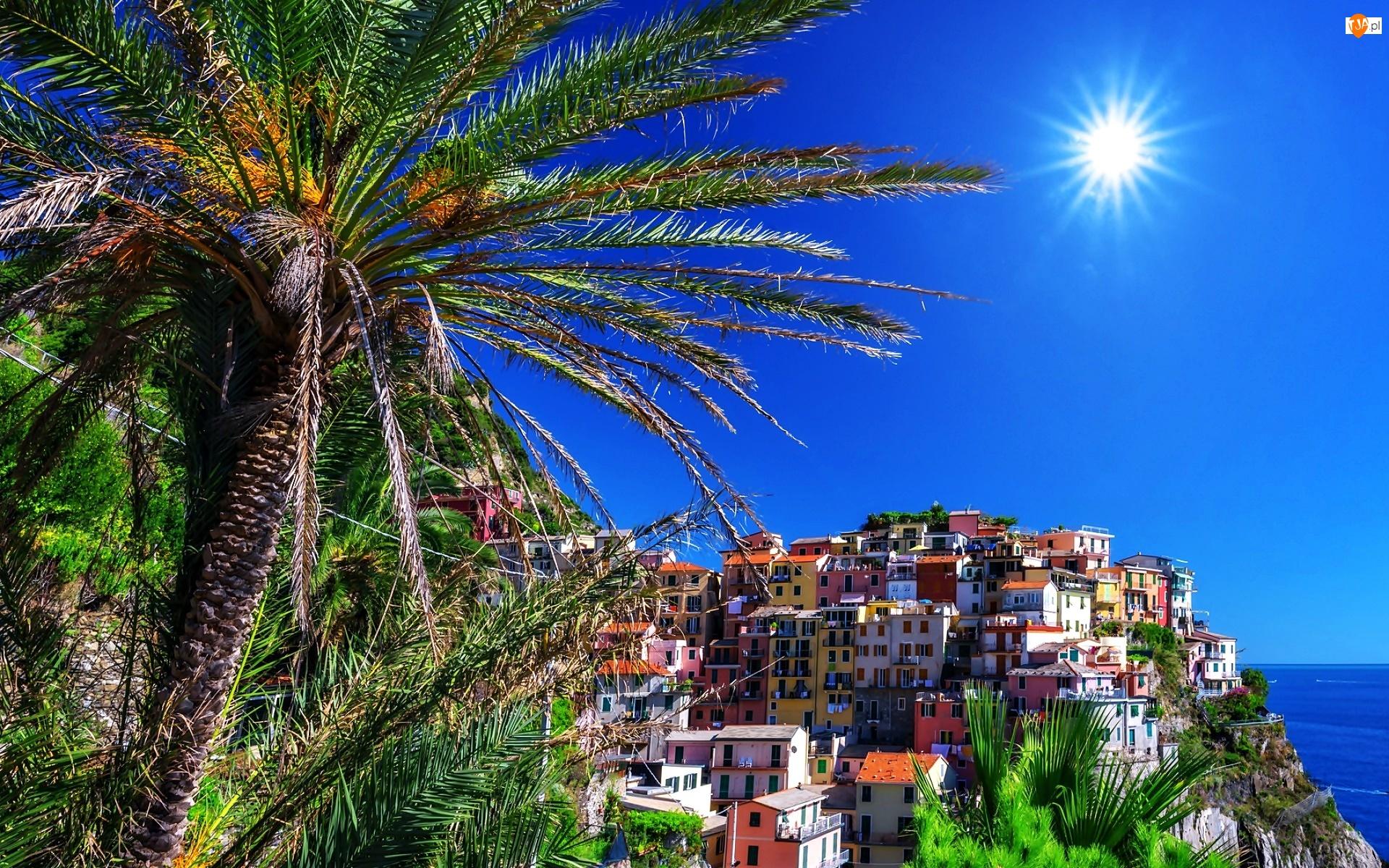 Miasto, Palmy, Manarola, Lato, Włochy, Słońce