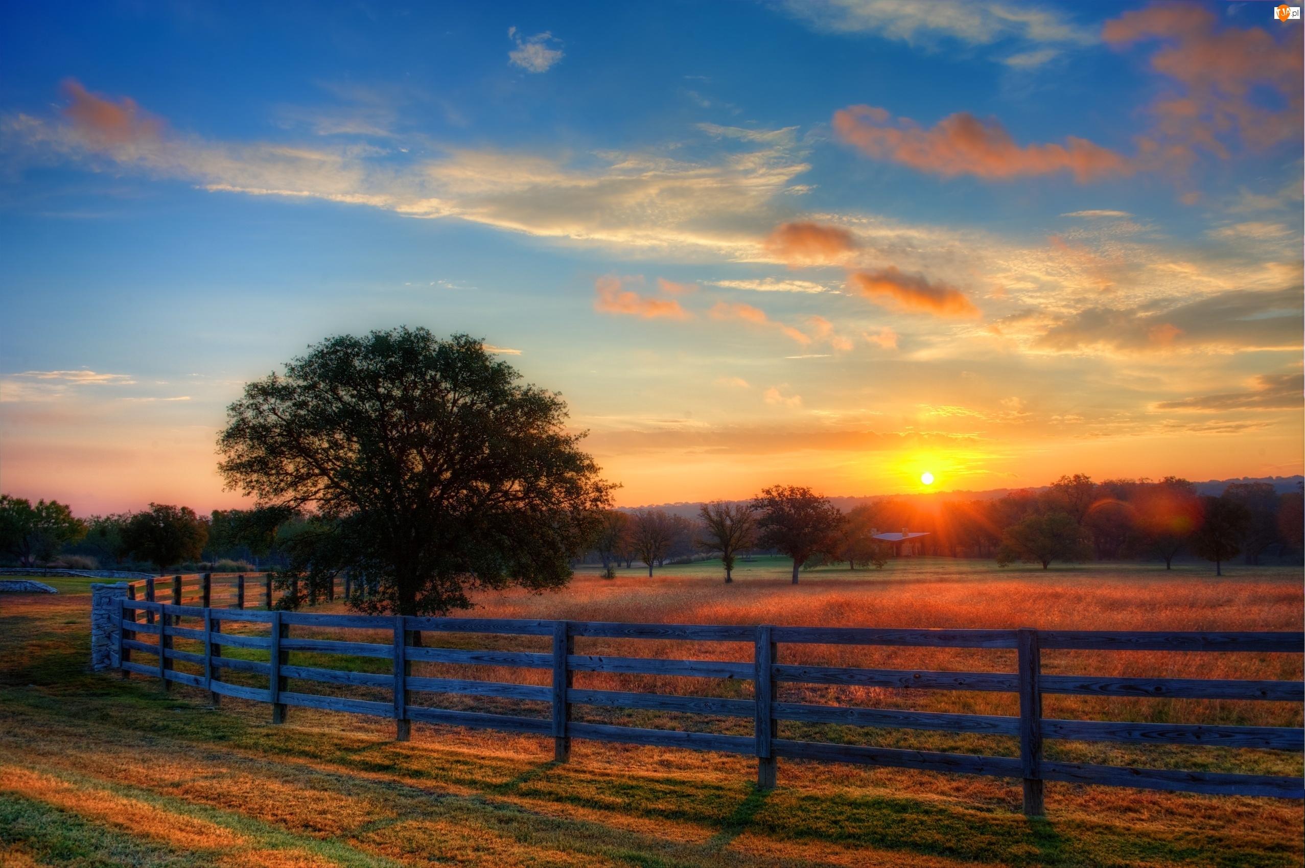 Słońca, Ogrodzone, Drzewa, Pole, Wschód
