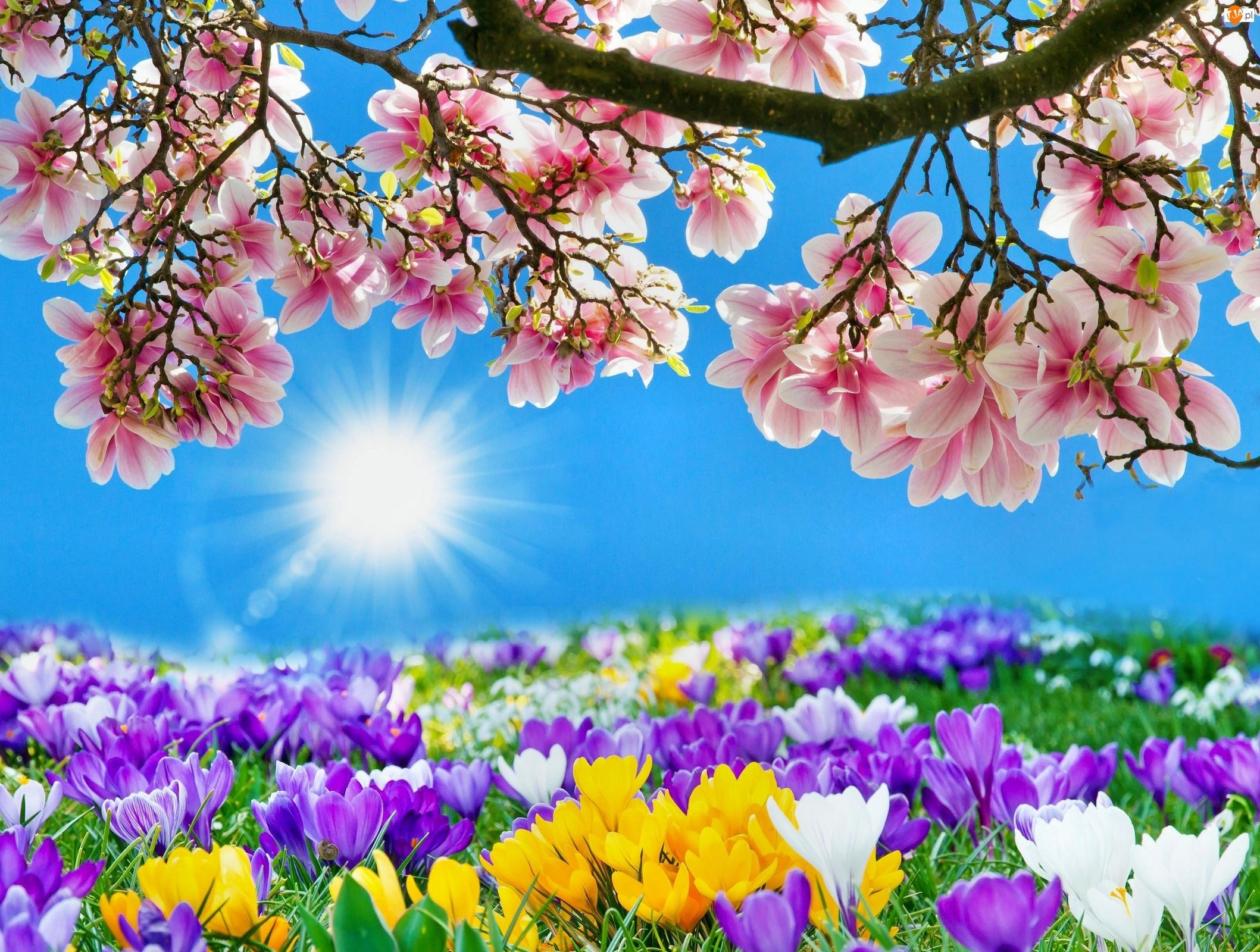 Wiosenne, Wiosna, Kwiaty, Słońce