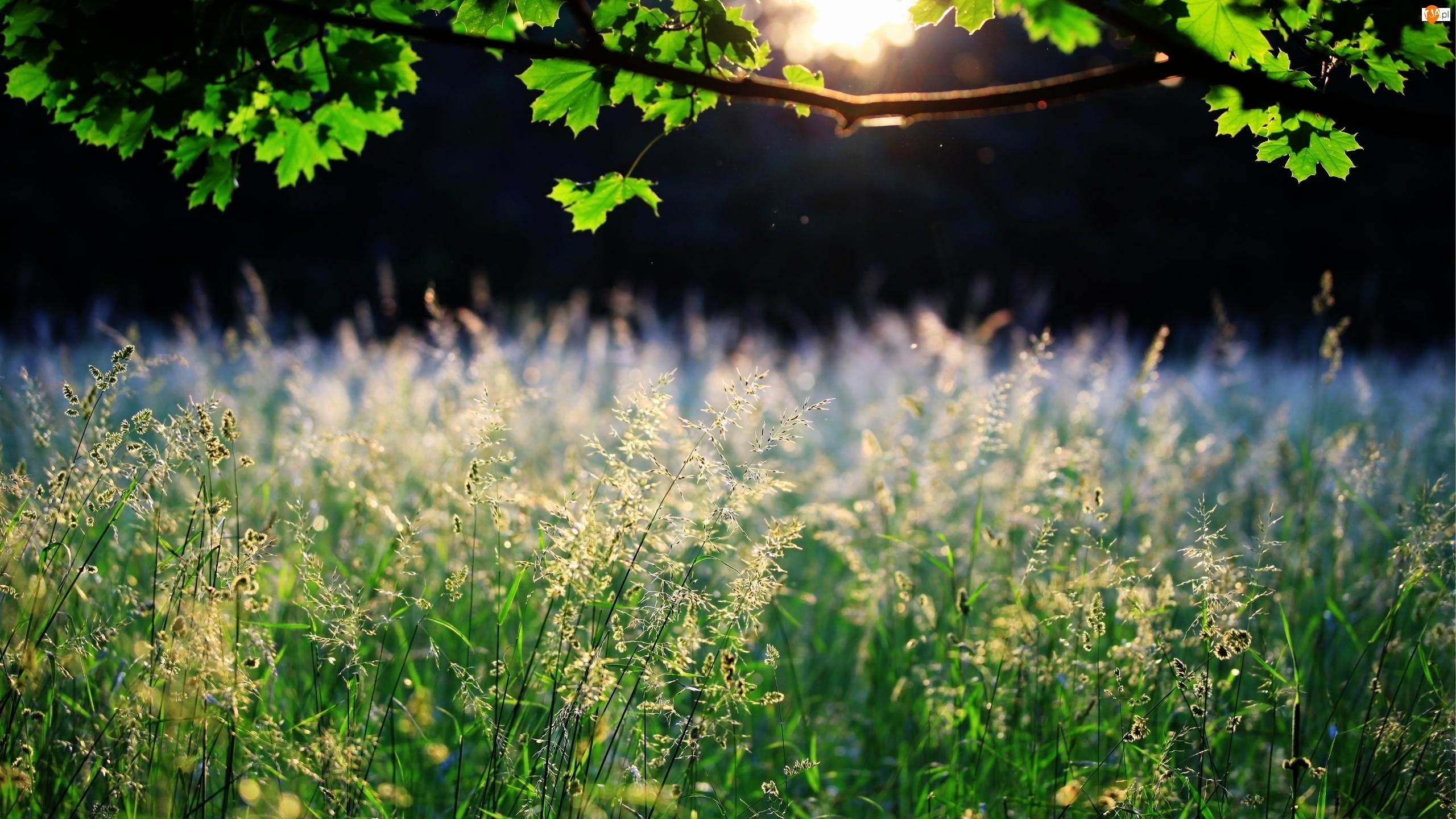Łąka, Słońce