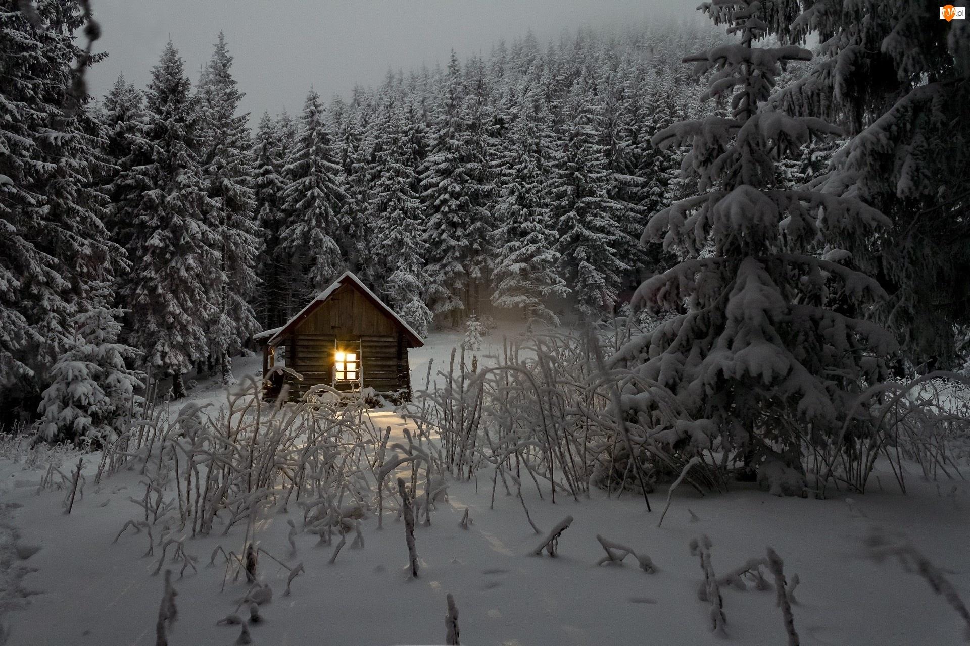 Zima, Domek, Las, Drzewa