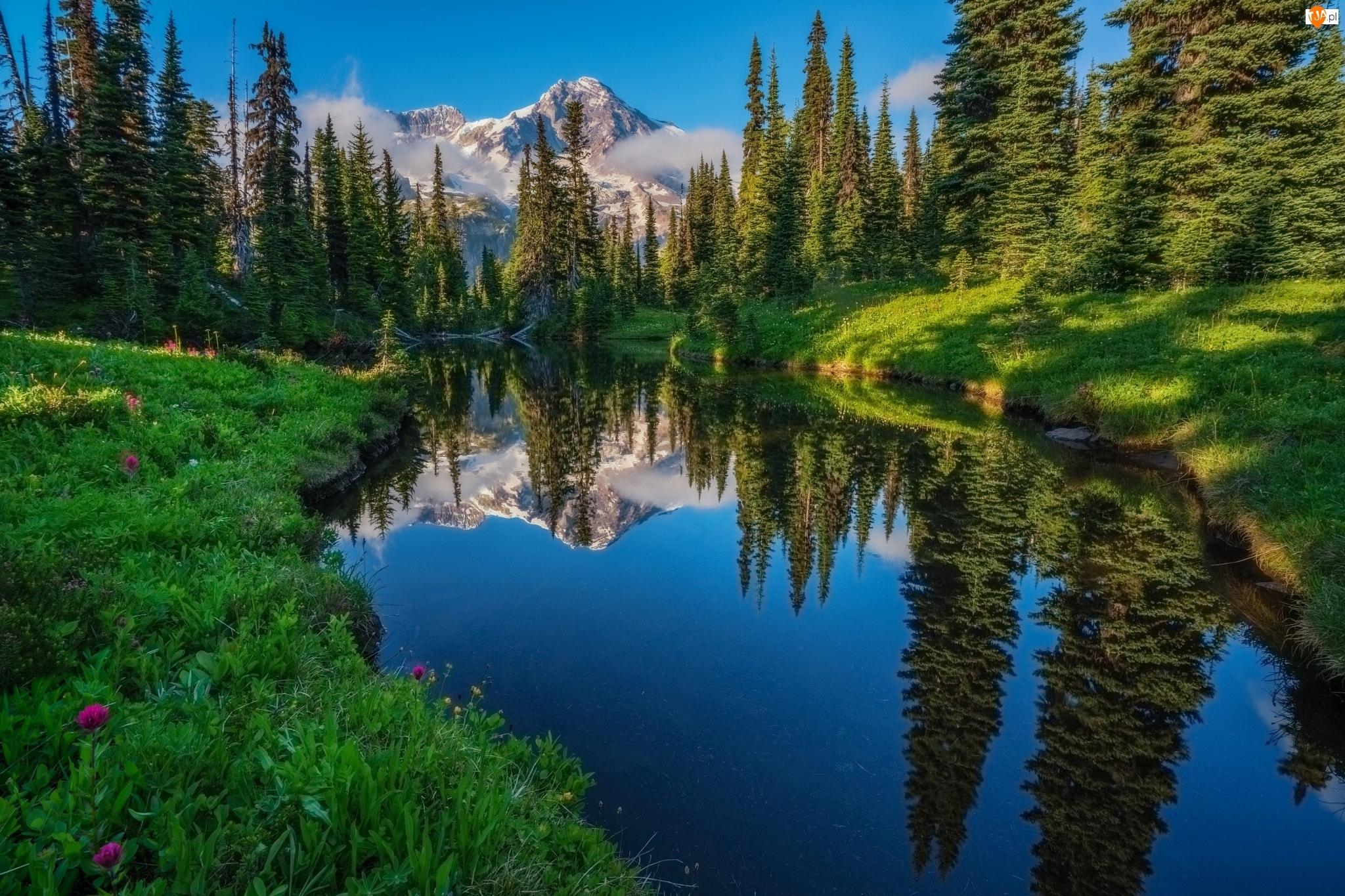 Odbicie, Las, Rzeka, Drzewa, Góry
