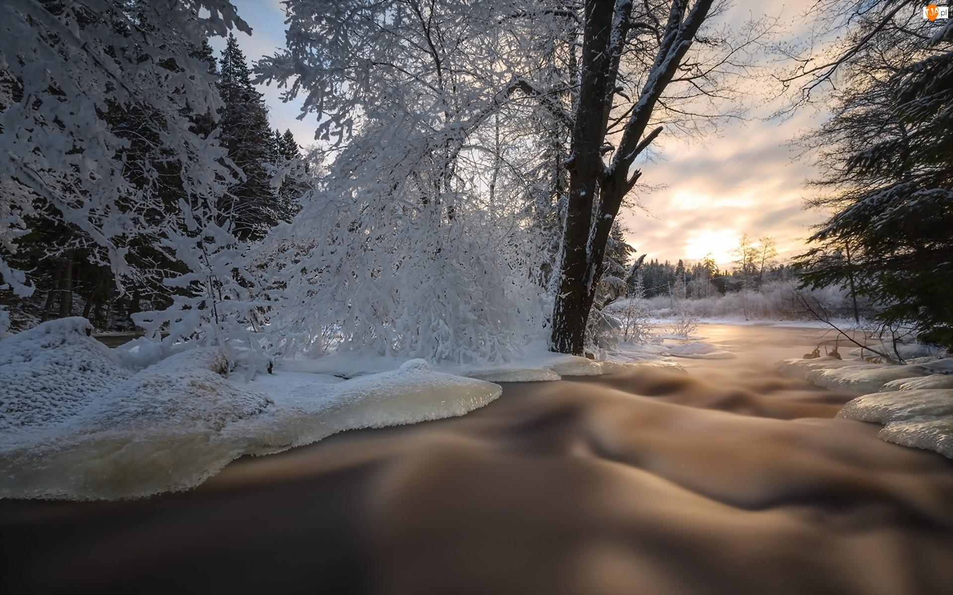 Zima, Wschód słońca, Potok, Drzewa