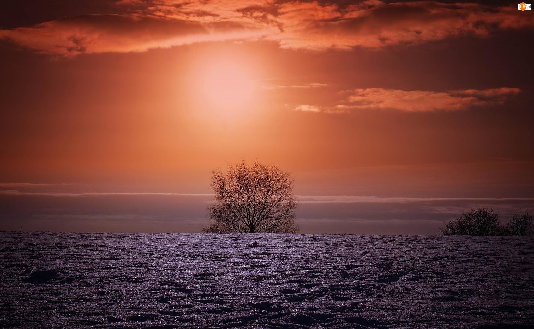 Drzewo, Zima, Zachód słońca
