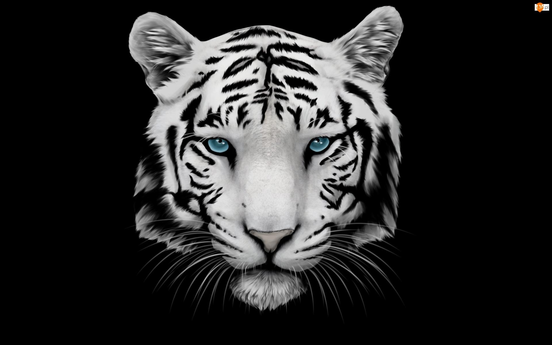 Grafika, Tło czarne, Głowa, Tygrys