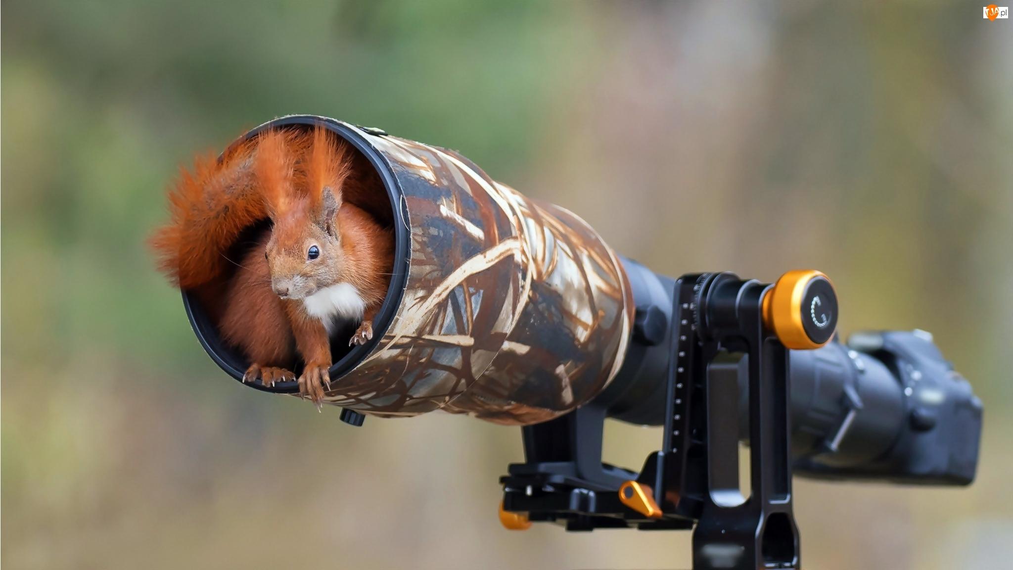 Wiewiórka, Aparat fotograficzny, Schronienie, Obiektyw