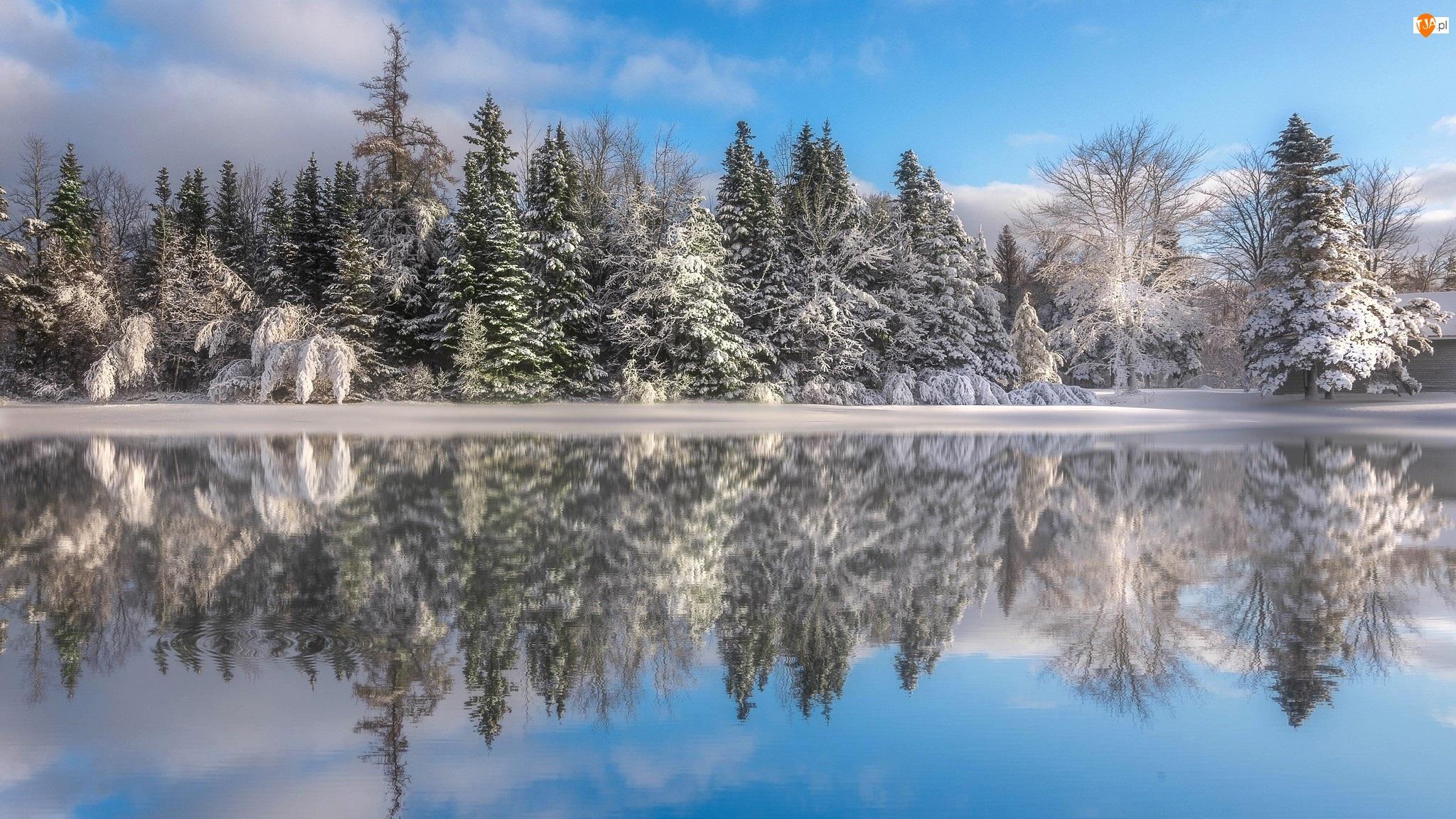 Rzeka, Ośnieżone, Prowincja Nowy Brunszwik, Kanada, Odbicie, Zima, Drzewa