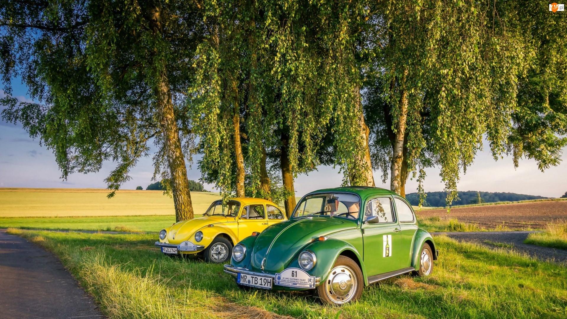 Garbus, Pola, Samochody, Droga, Volkswagen, Brzozy