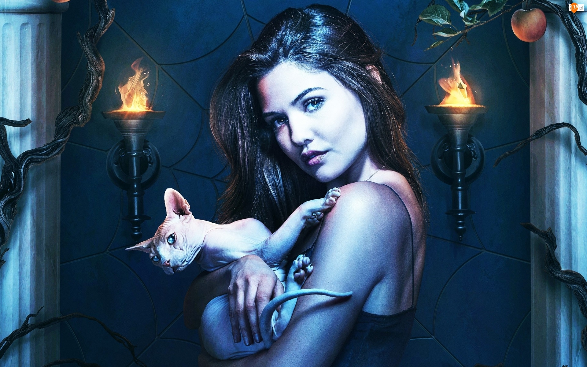 The Originals, Kot, Danielle Campbell, Sfinks doński, Serial, Kobieta