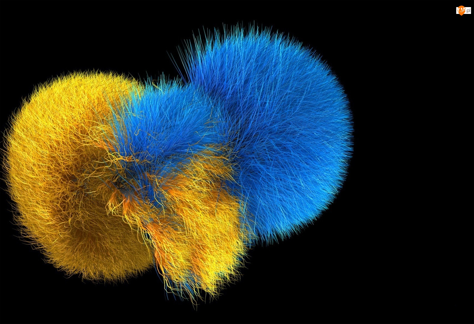 Pomponiki, Grafika 3D, Żółty, Niebieski