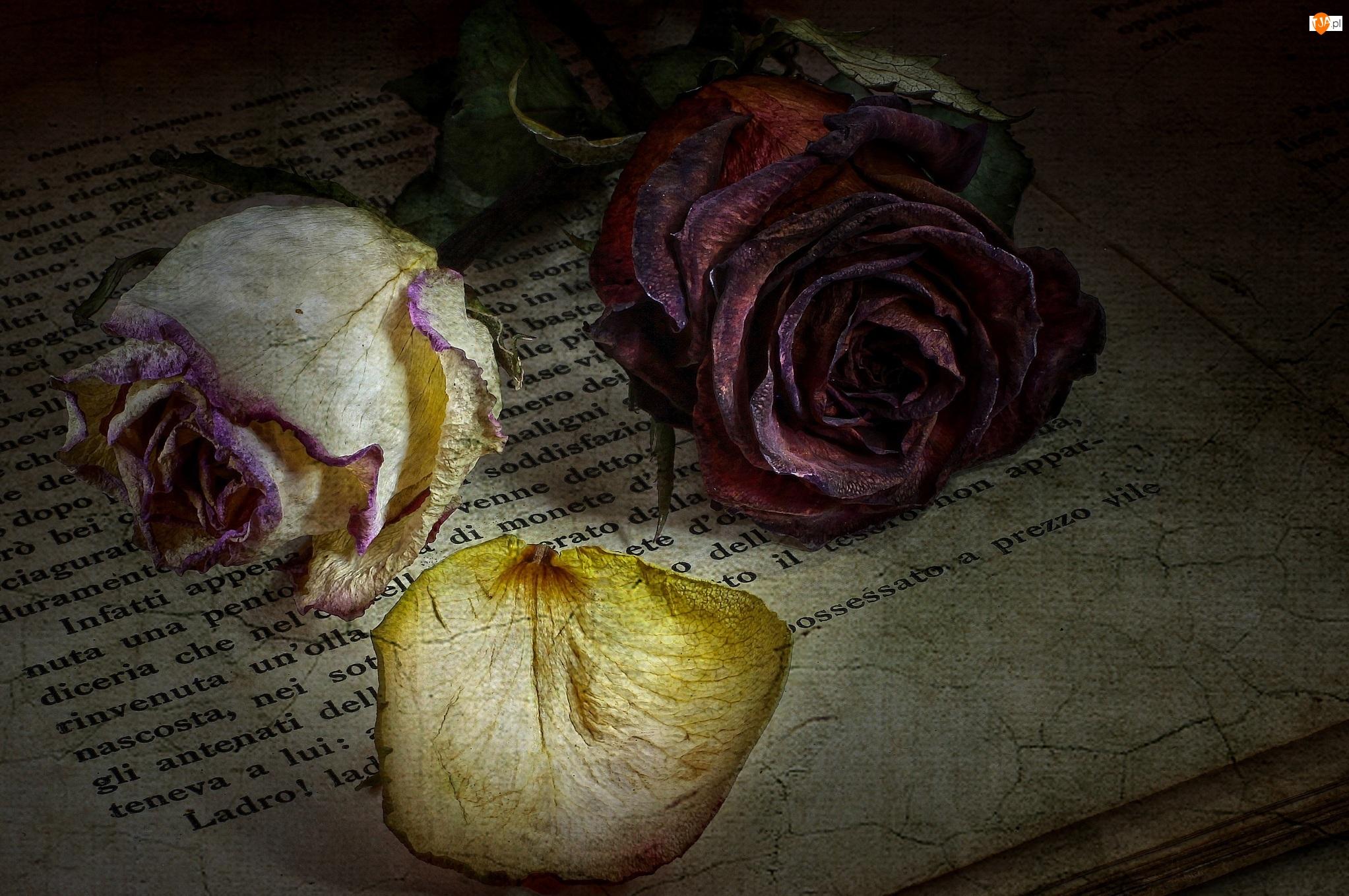 Książka, Róże, Płatki