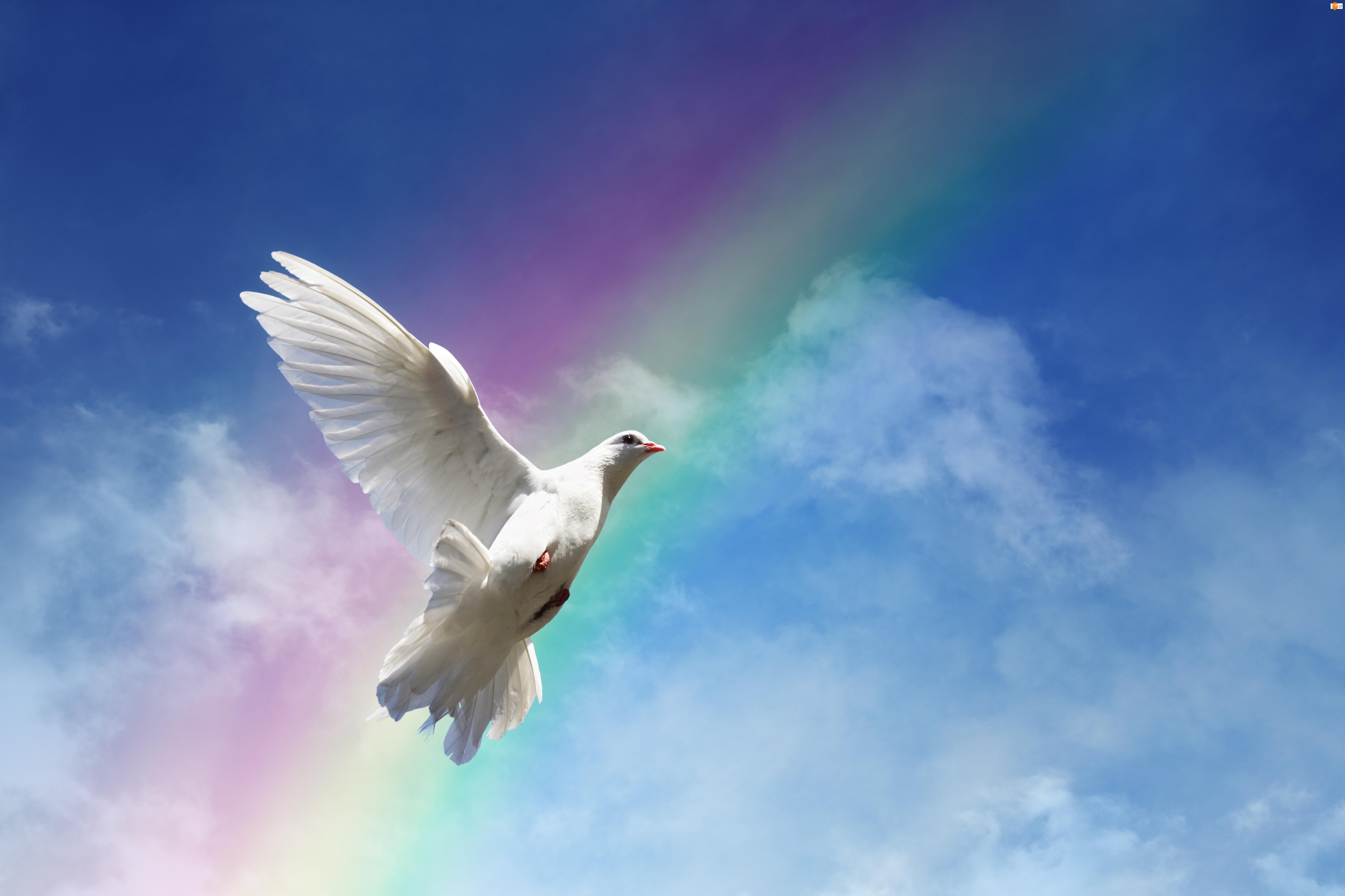 Ptak, Niebo, Gołąb, Tęcza