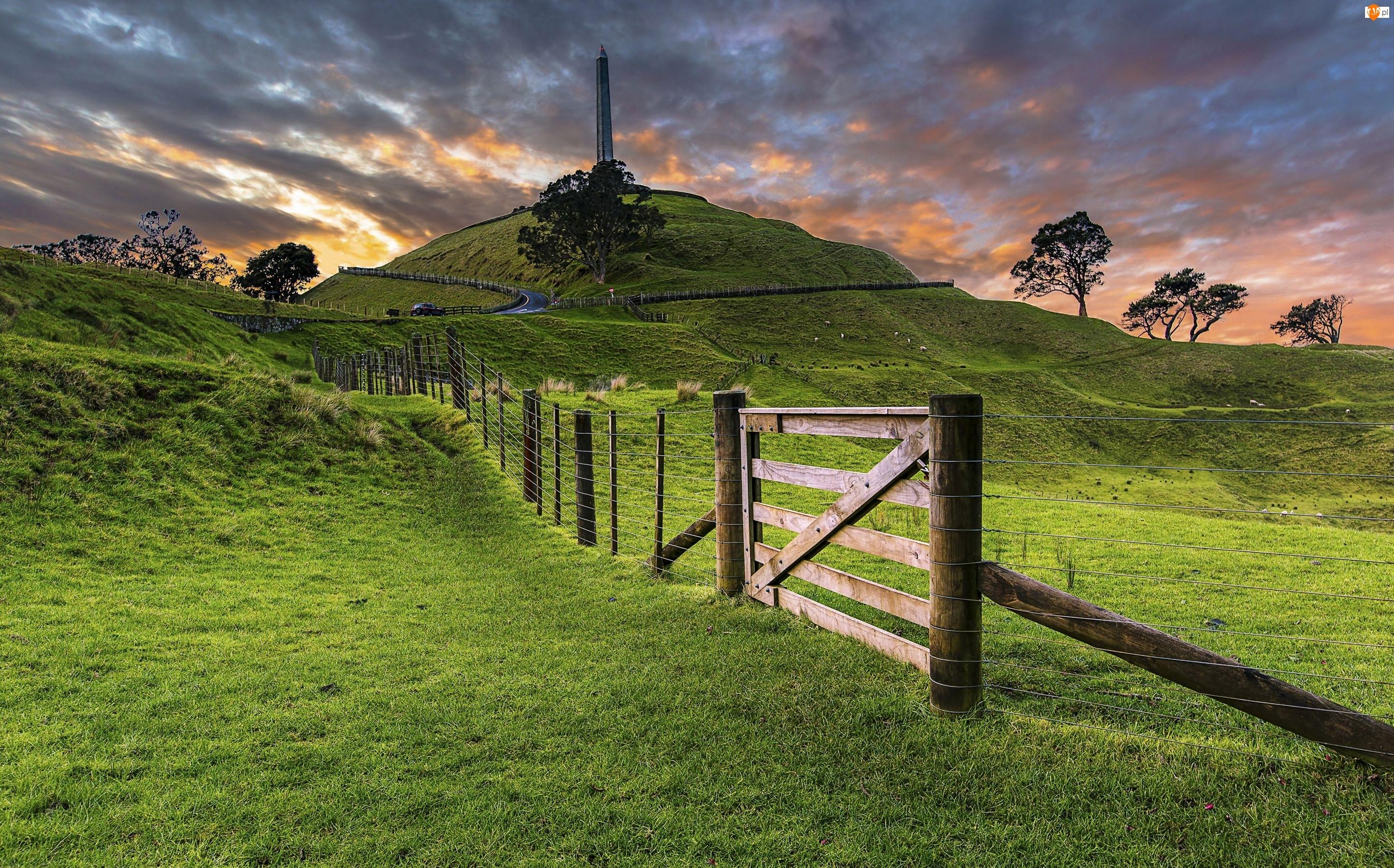 Płot, Nowa Zelandia, Łąki, Auckland, Trawa