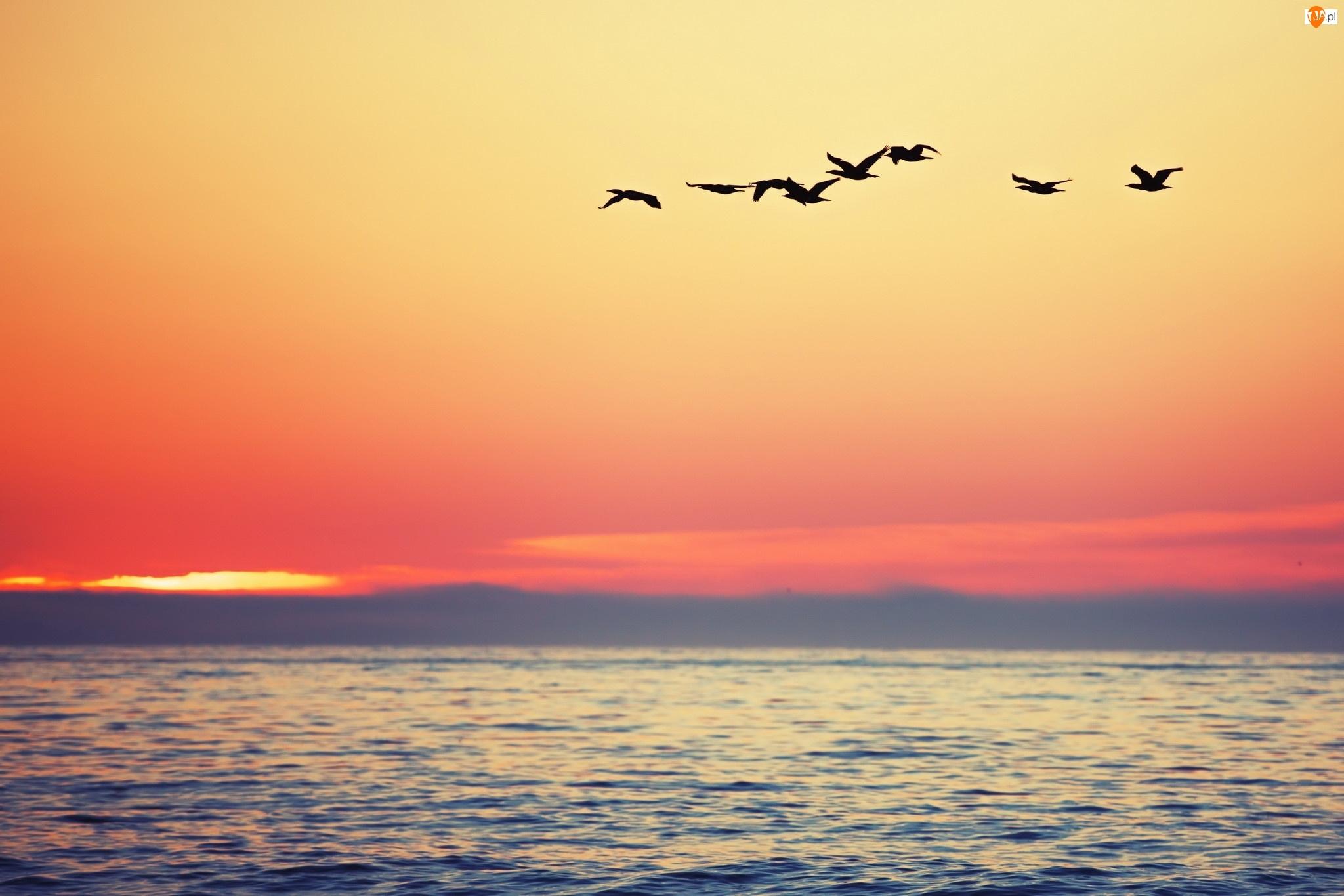Morze, Ptaki, Zachód słońca