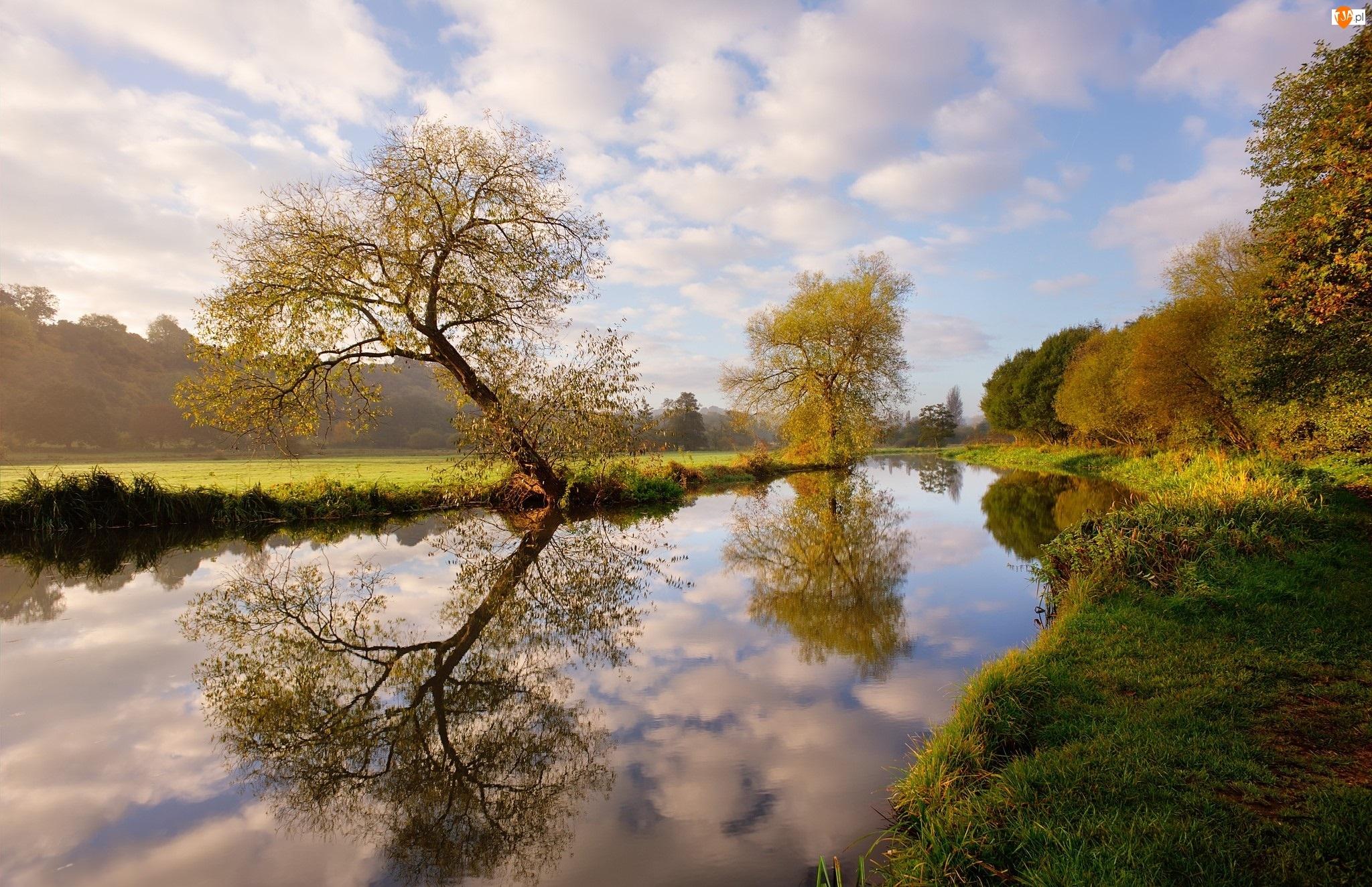 Anglia, Odbicie, Rzeka Wey, Drzewa