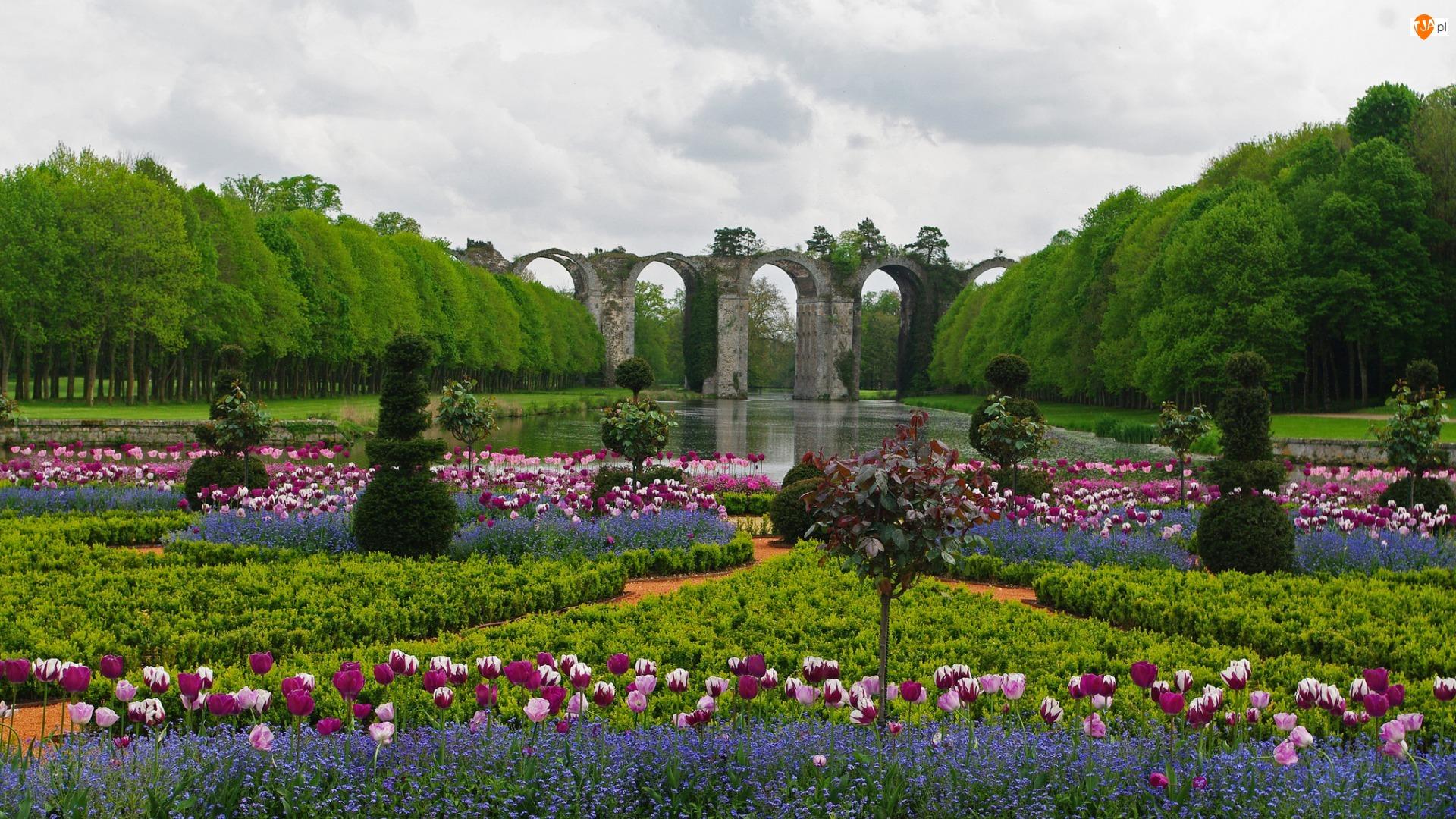 Tulipany, Staw, Niezapominajki, Paryż, Park, Francja, Kwiaty, Wersal, Most