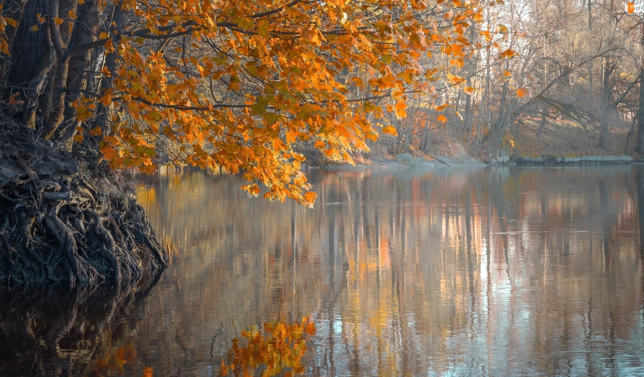 Jesień, Korzenie, Rzeka, Drzewa