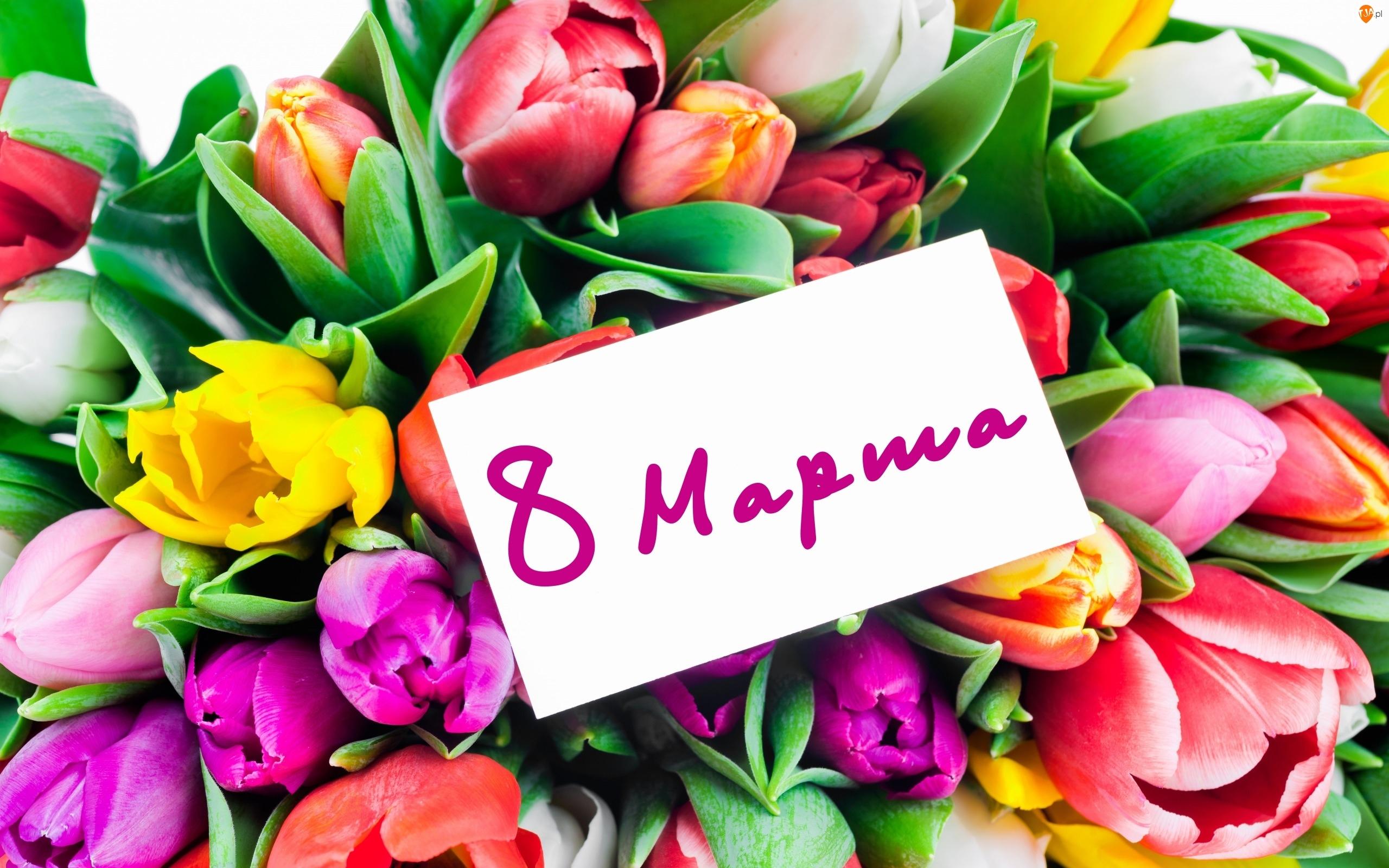Dzień Kobiet, Tulipany, Kartka, Różnokolorowe
