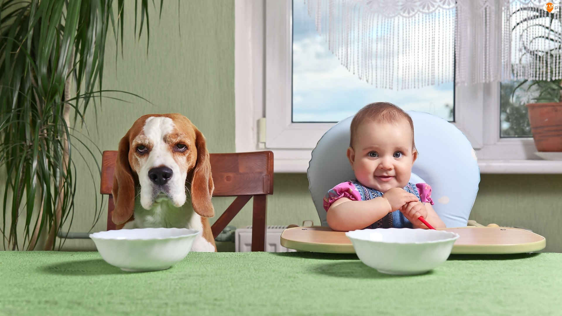 Śmieszne, Dziecko, Beagle, Pies, Jedzenie