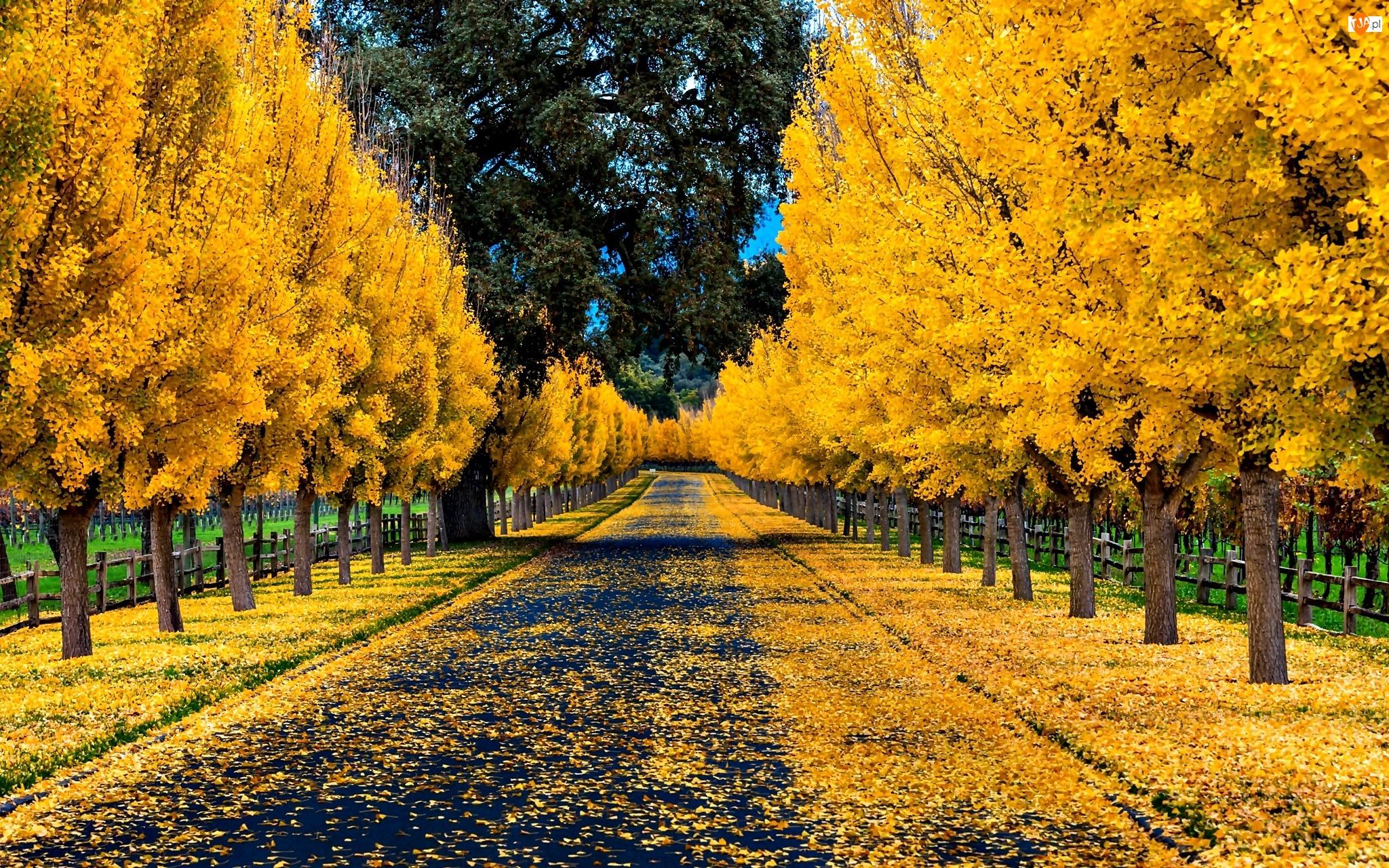Jesień, Drzewa, Park, Aleja