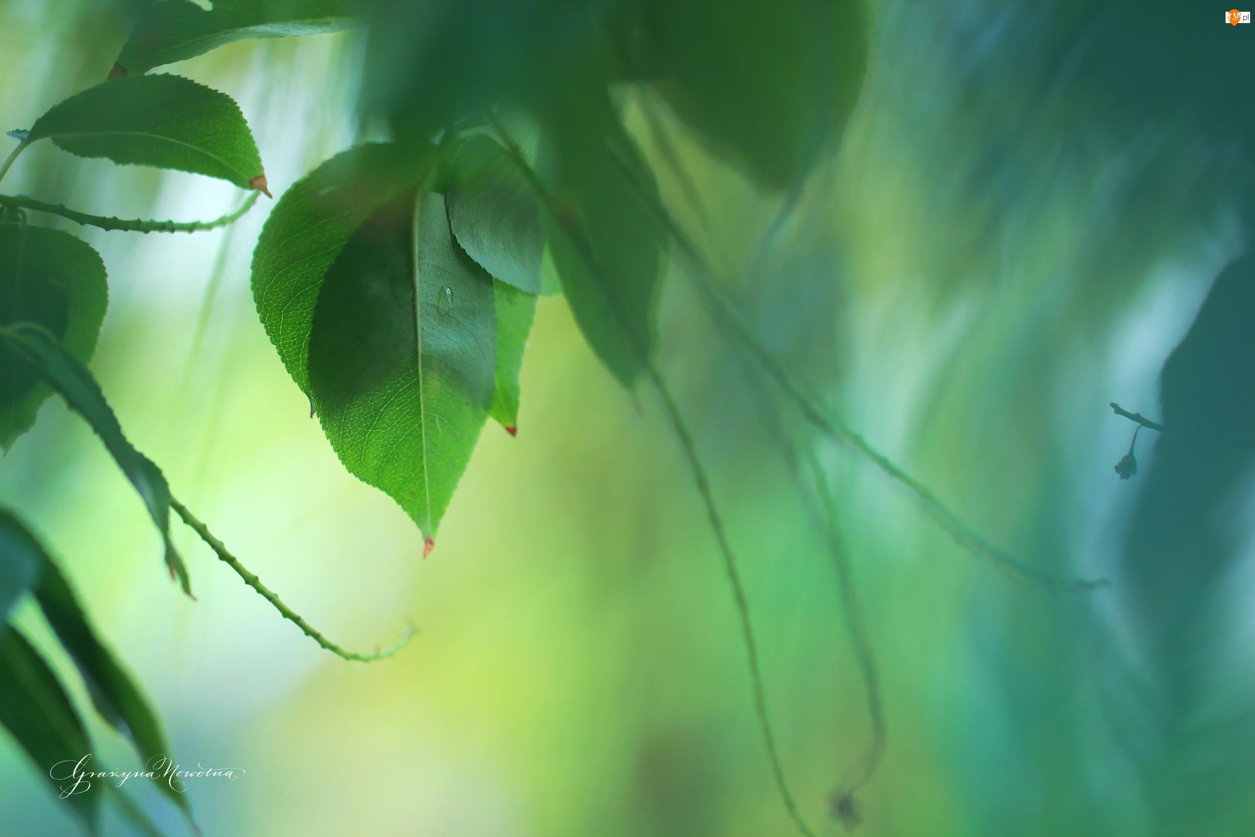 Liście, Zielone